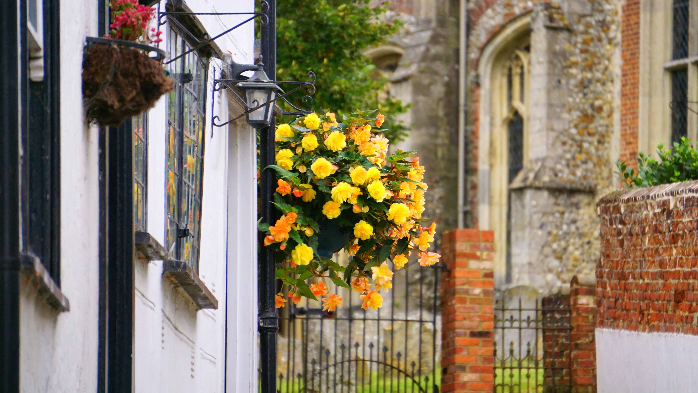 images gratuites fleur plante maison floraison fen tre b timent mur d coration. Black Bedroom Furniture Sets. Home Design Ideas