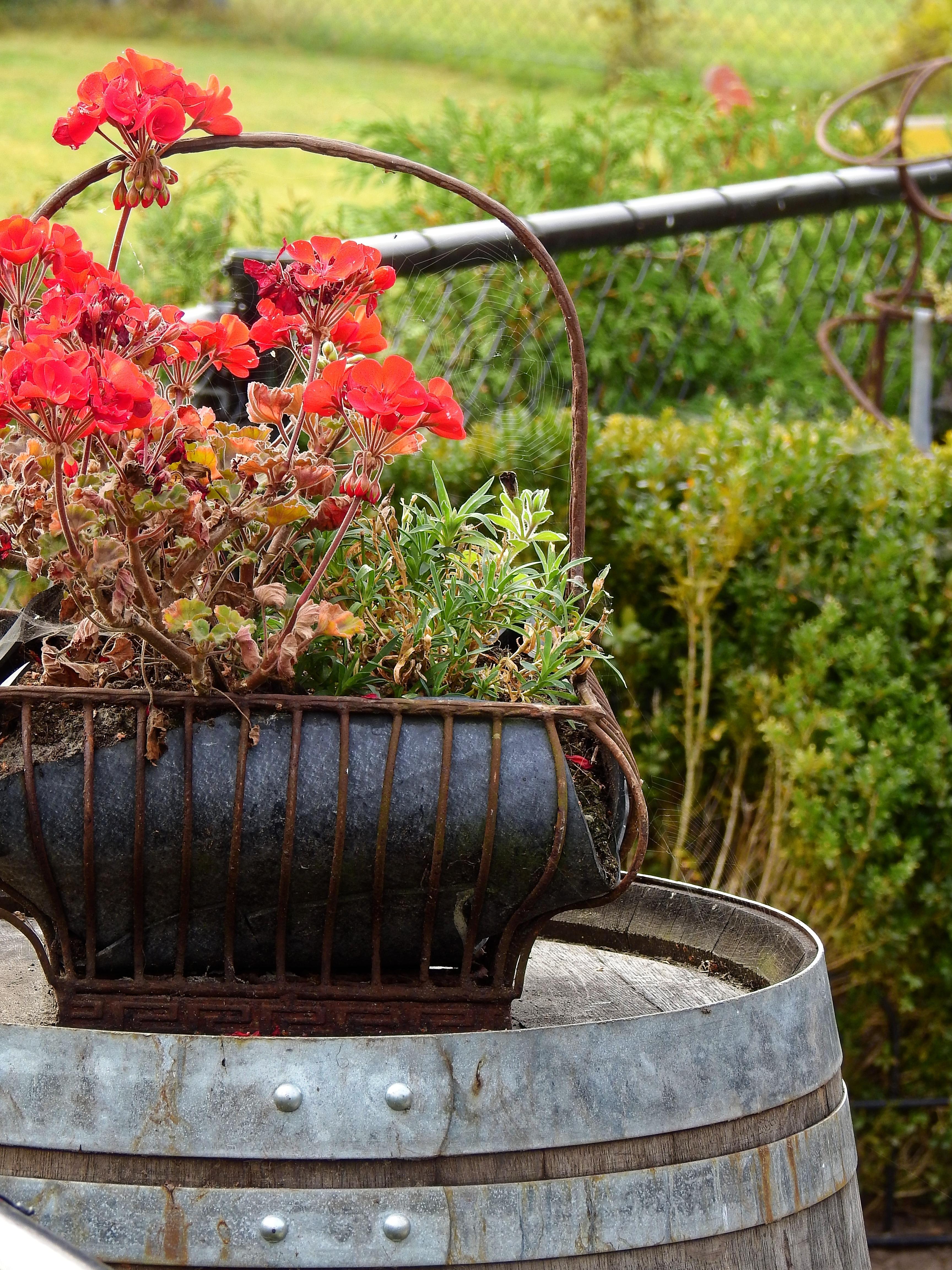 Fotos gratis flor planta c sped florecer decoraci n for Jardin al aire libre de madera deco