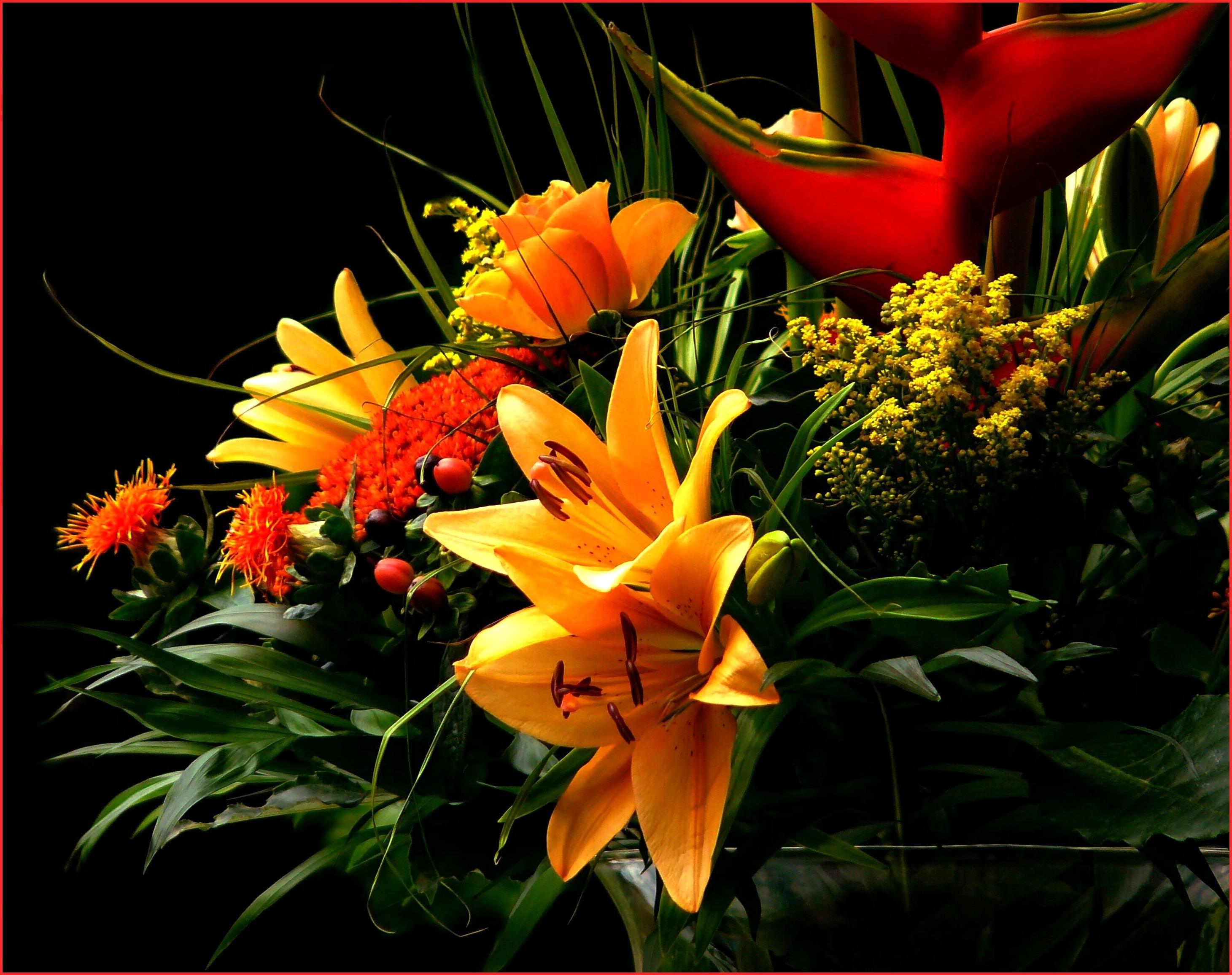 Free Images Blossom Leaf Bloom Rose Orange Red Botany