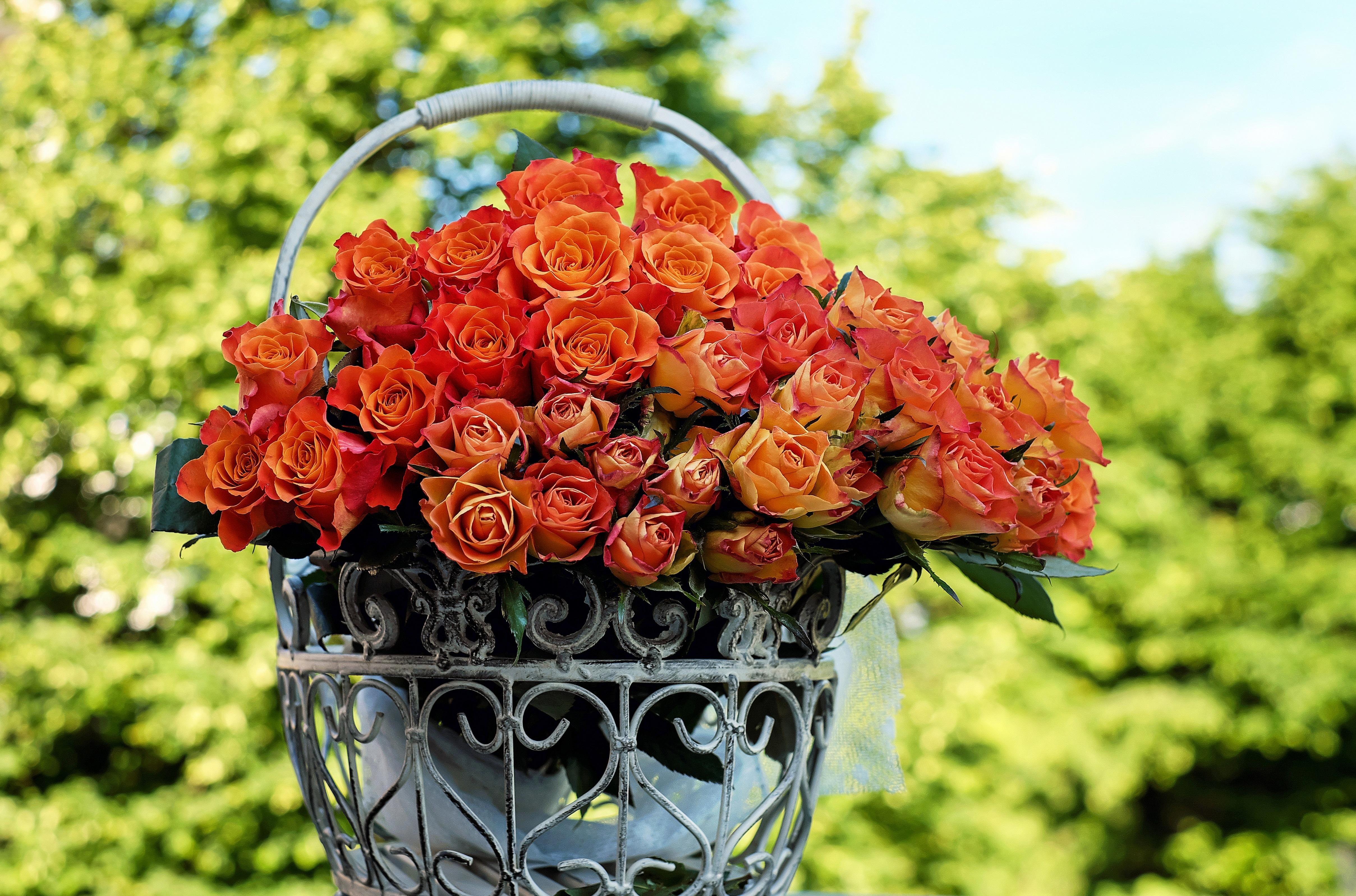 How to Plant a Cut Flower Garden
