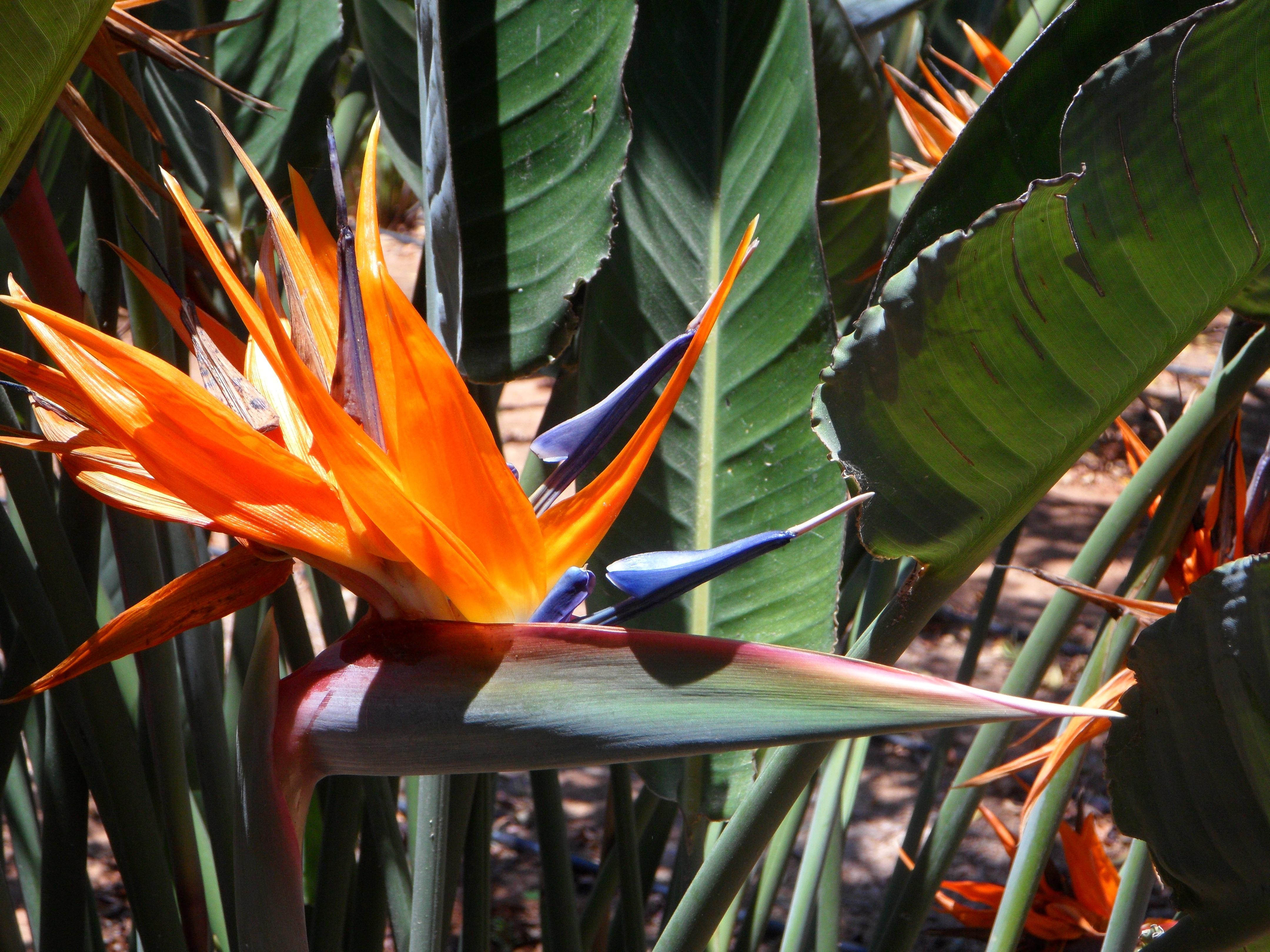 plante exotique ornementale
