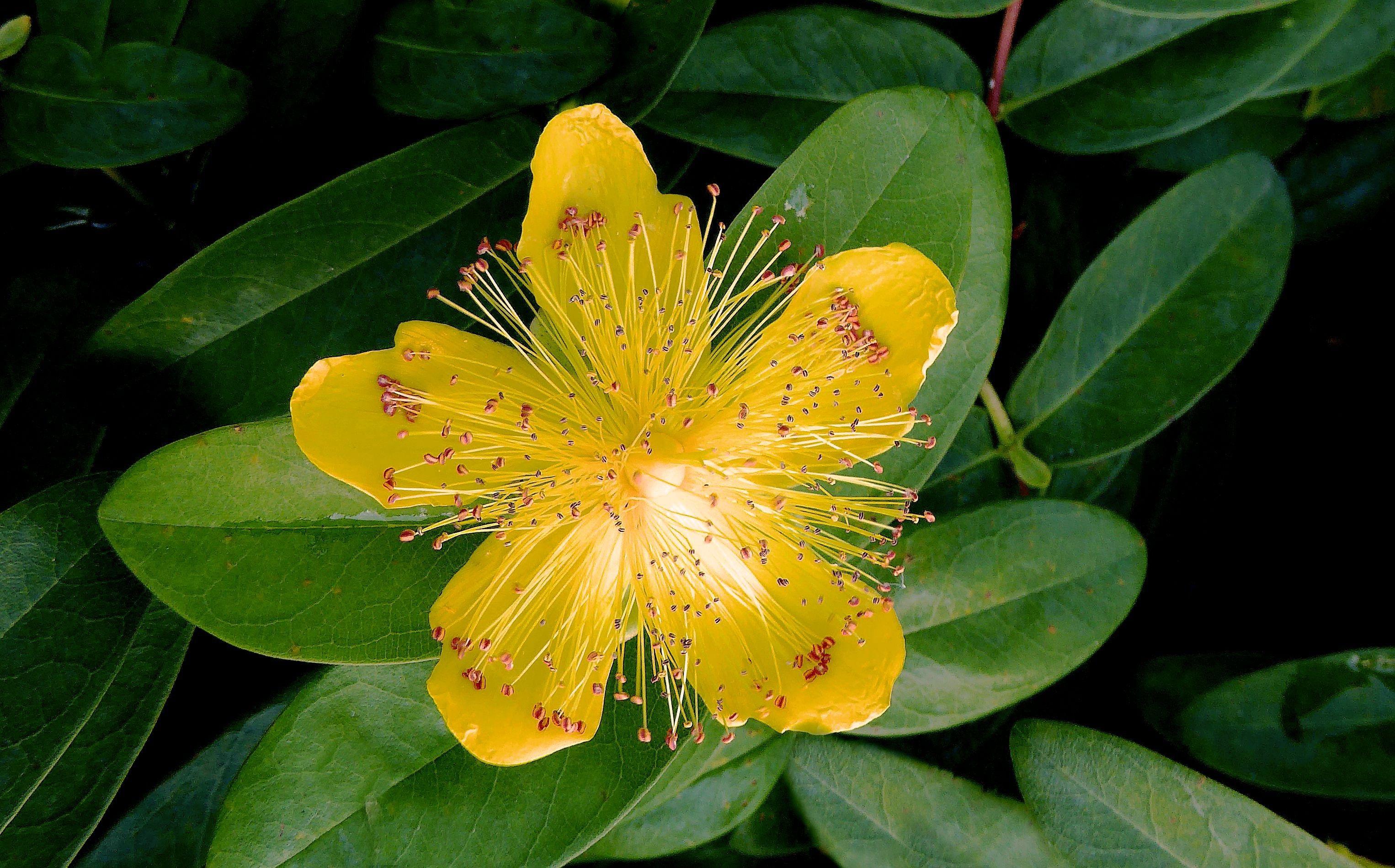 Images Gratuites : fleur, feuille, Floraison, produire, à ...