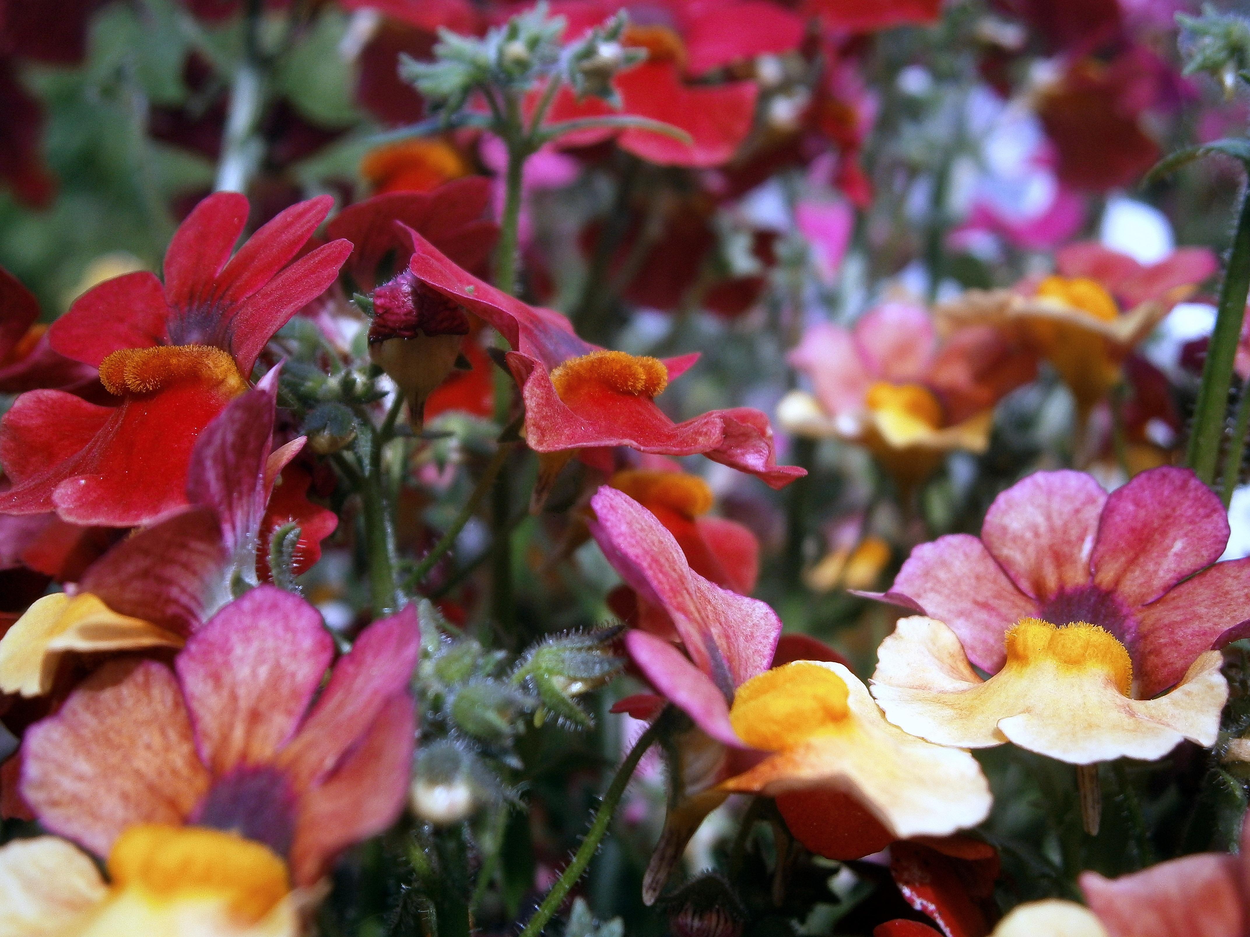 Poze Frunze Floare Petală A Inflori Buchet Culoare