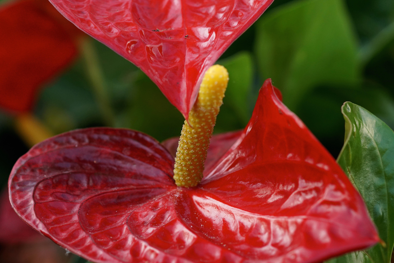 цветы антонио фото это