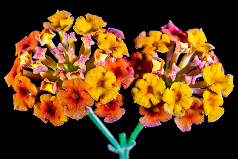 Images Gratuites : fleur, feuille, pétale, Floraison, Orange, jaune ...