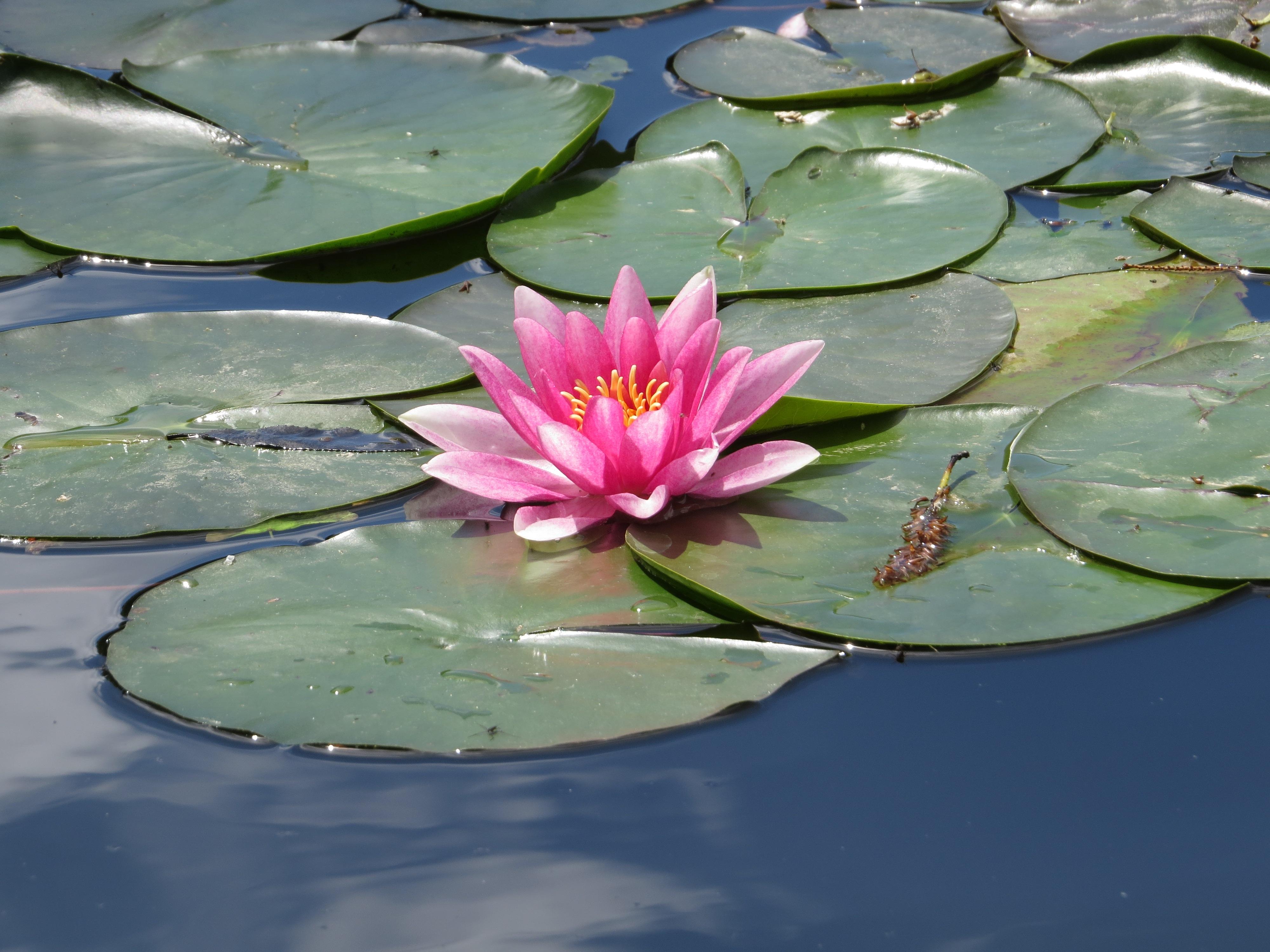 слова растения пресноводных водоемов фото красочные