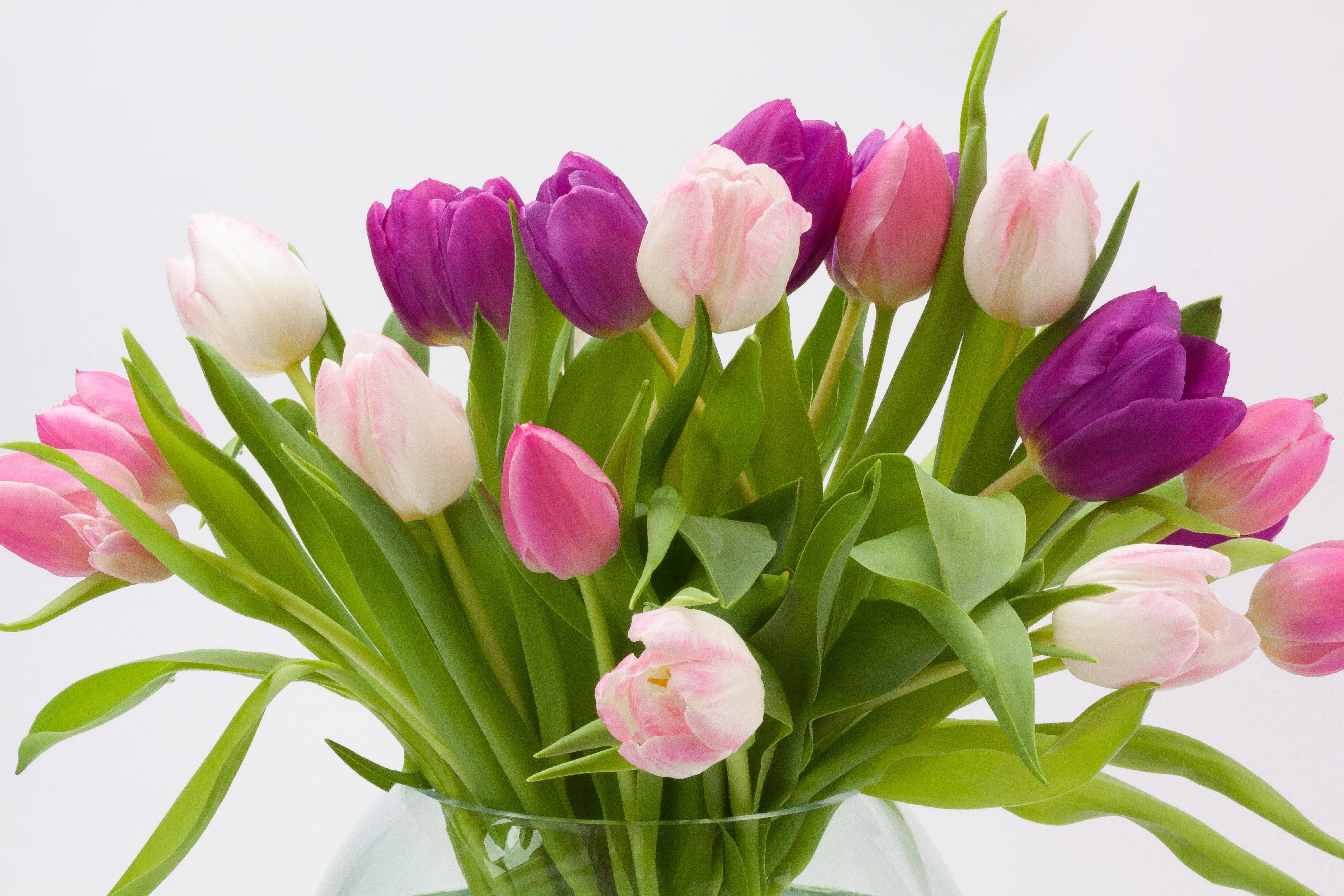 free images blossom leaf petal bloom tulip green red pink