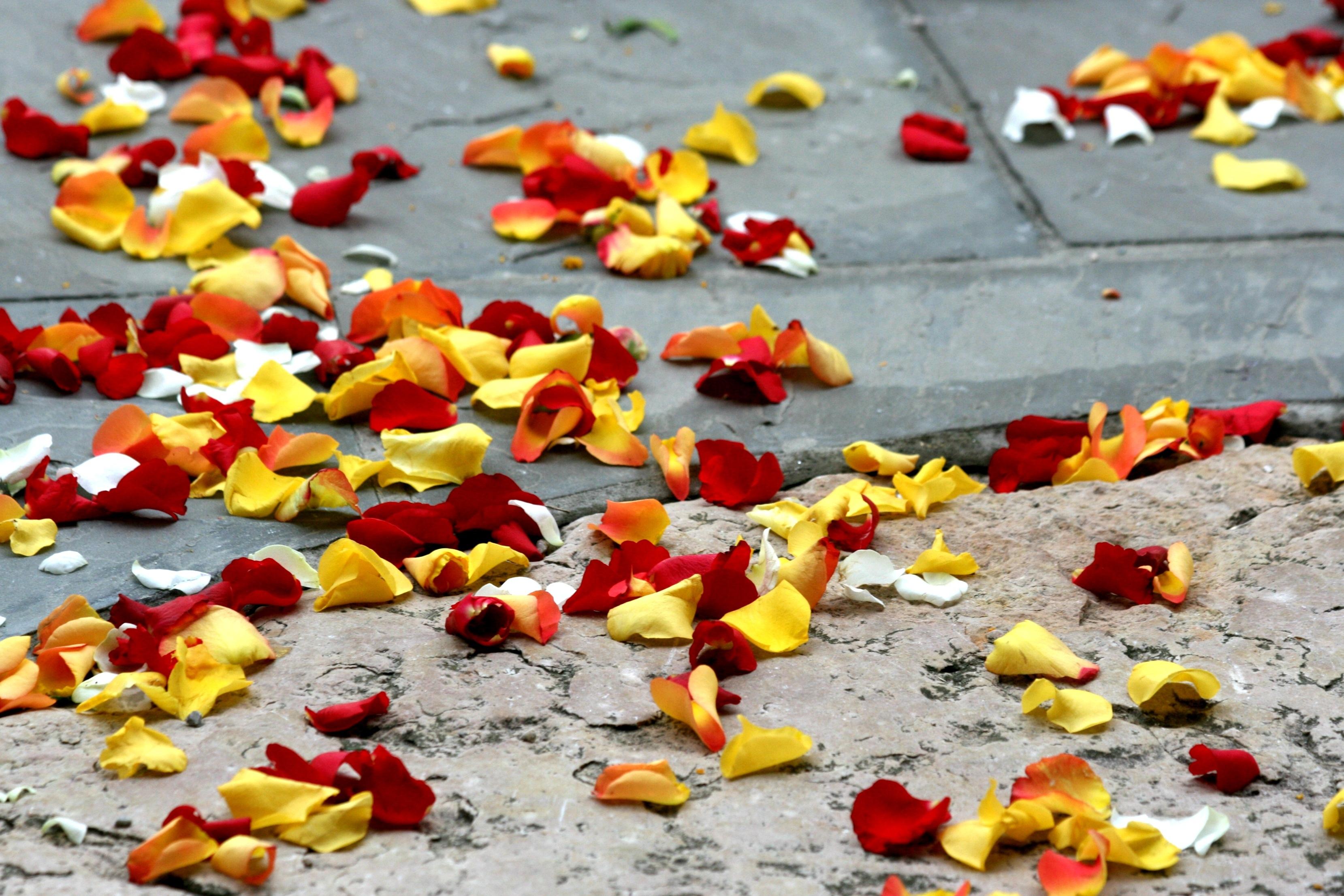 Kostenlose foto : blühen, Pflanze, Blatt, Blume, Blütenblatt, Blumen ...