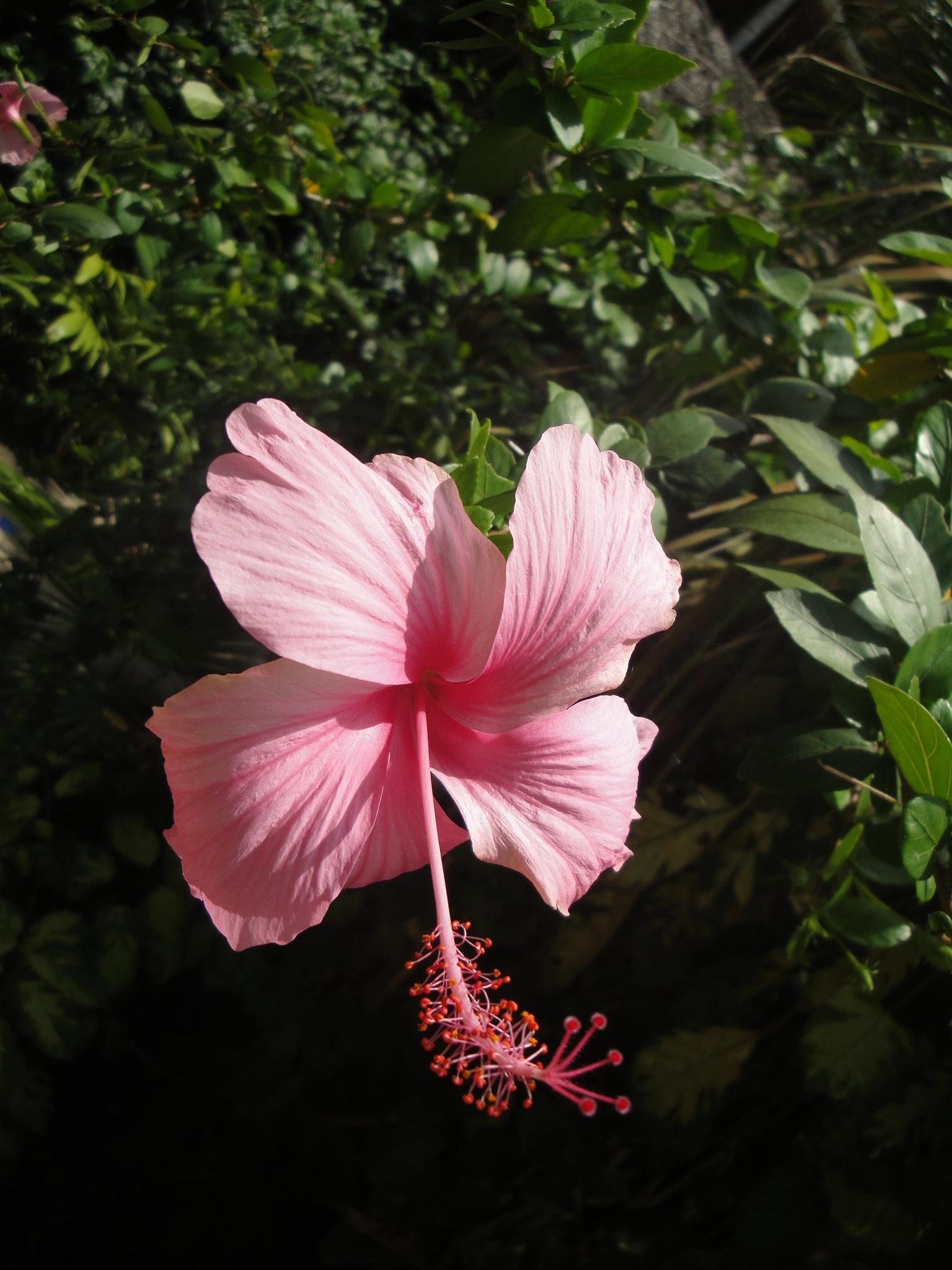 китайские цветы фото и названия отправить воздушный