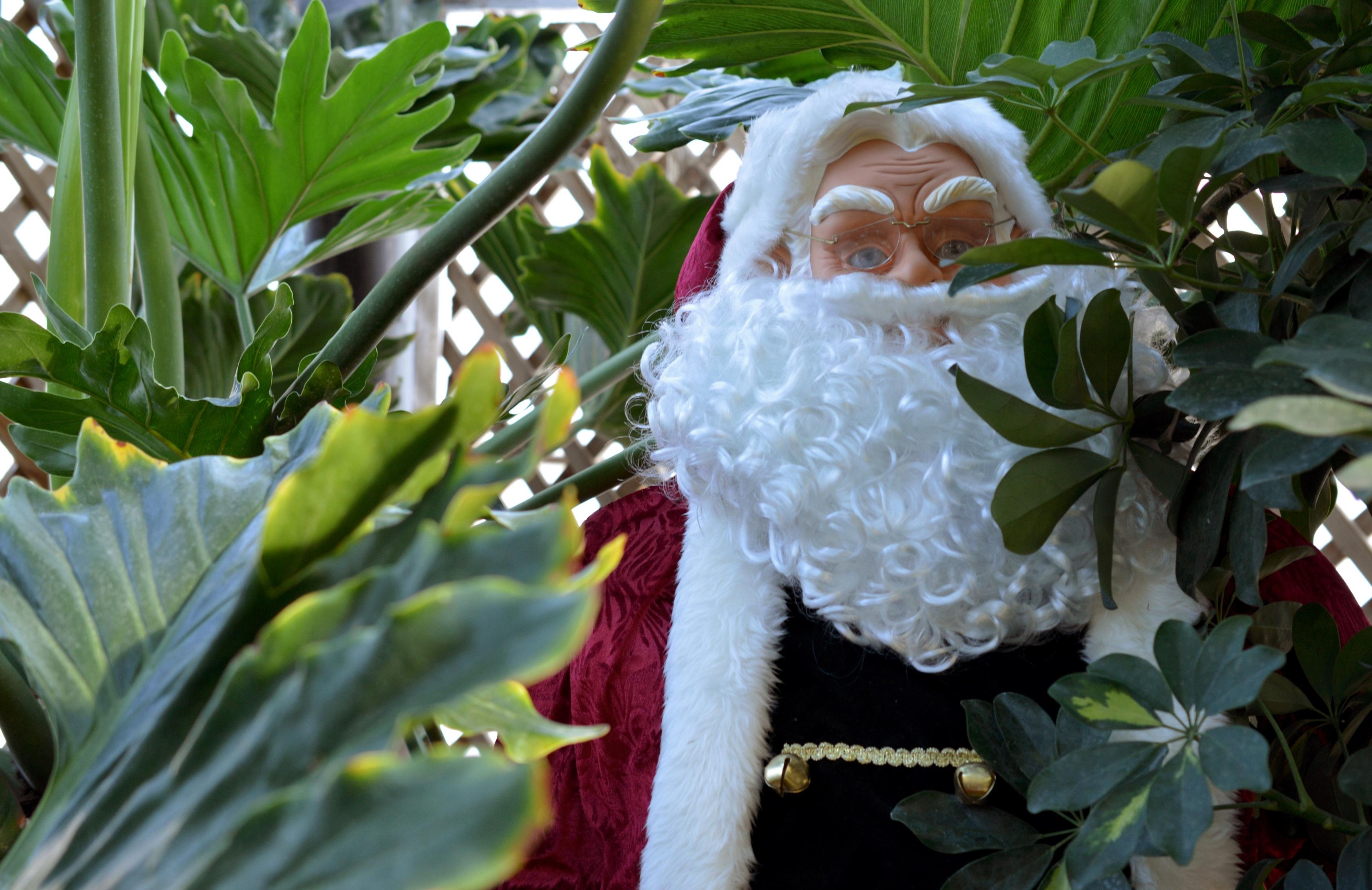 Free images blossom leaf tropical botany garden
