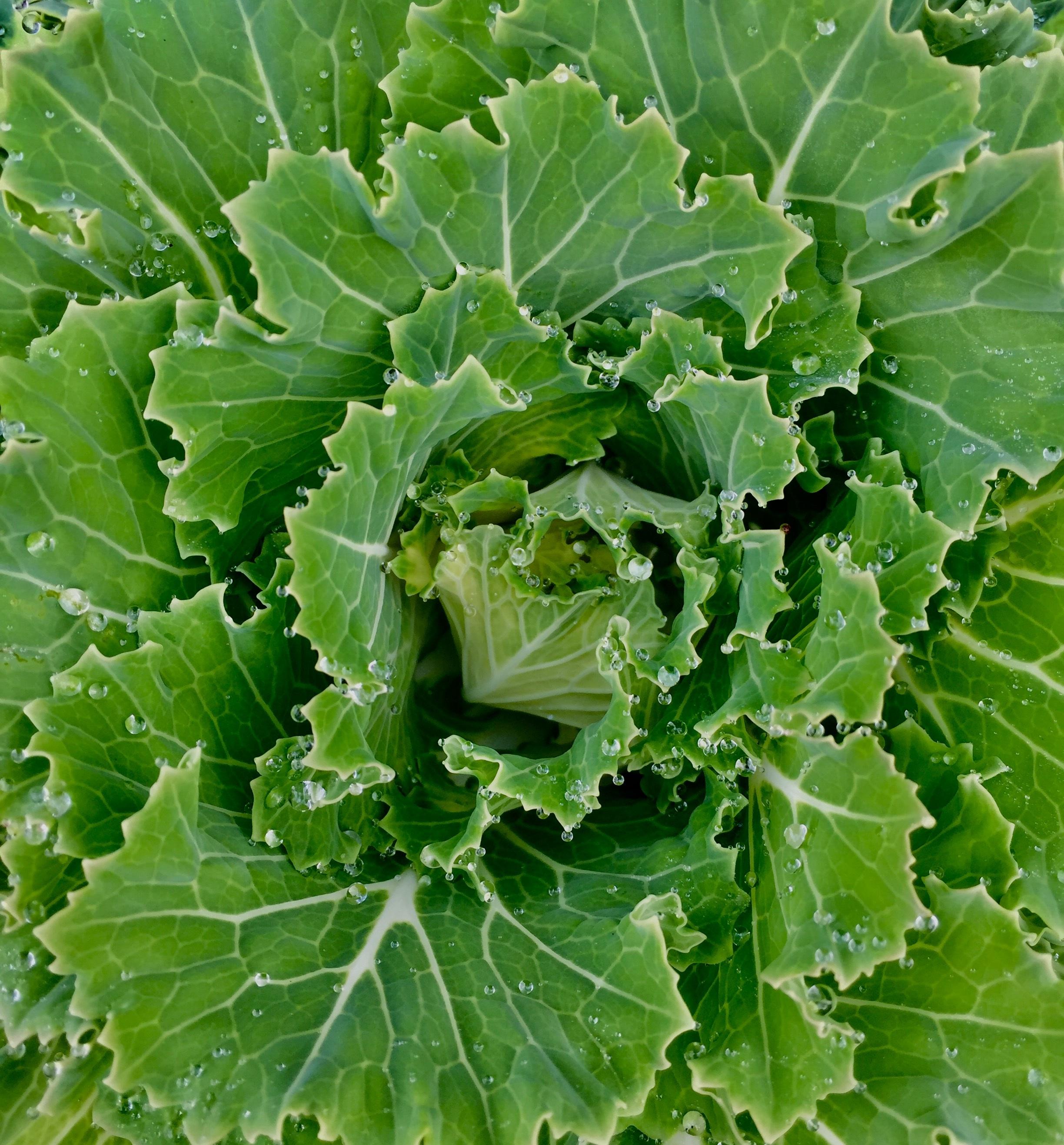 Images gratuites fleur plante feuille aliments vert for Plante annuelle