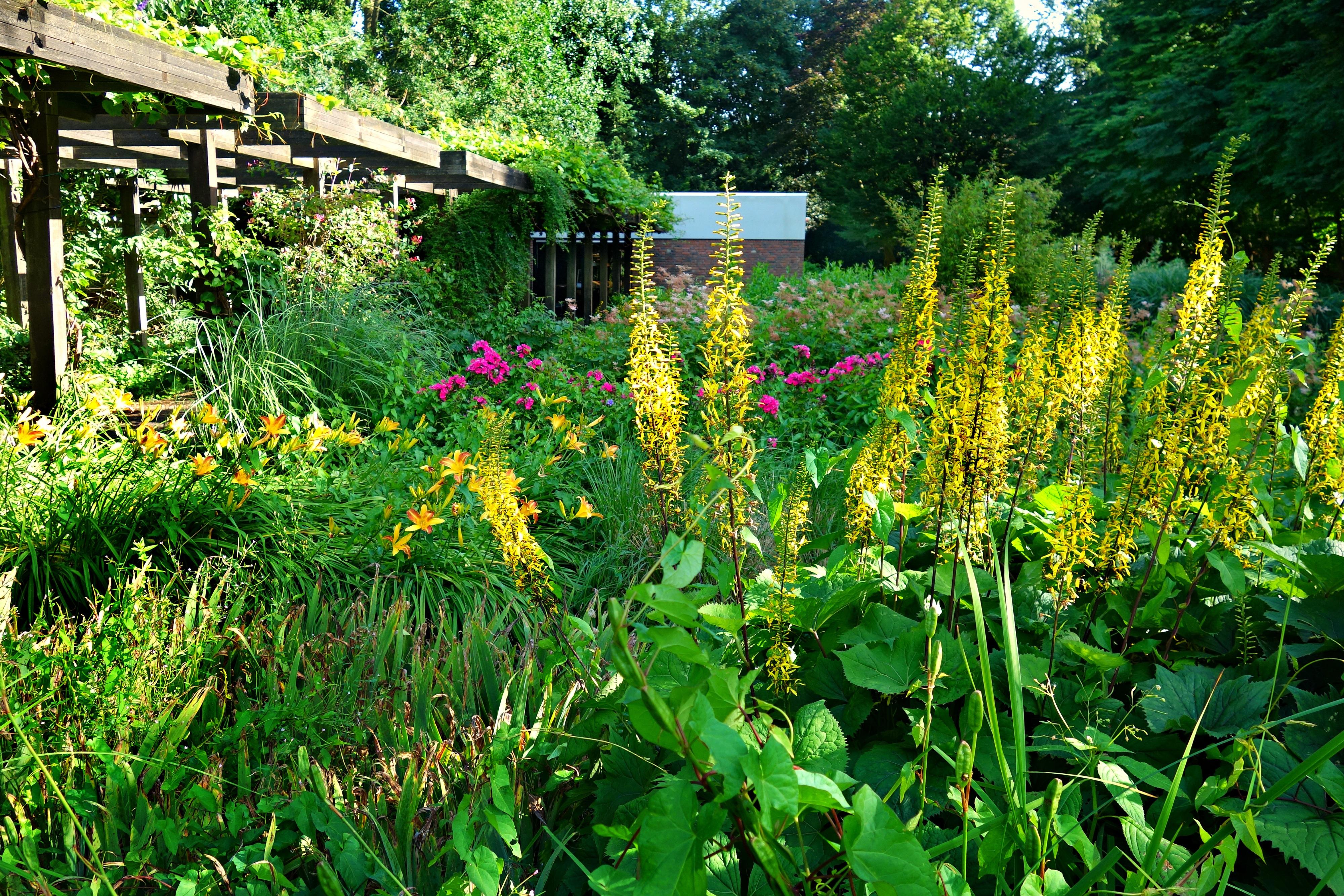 Kostenlose foto blühen Wiese Blume Sommer Botanik Garten