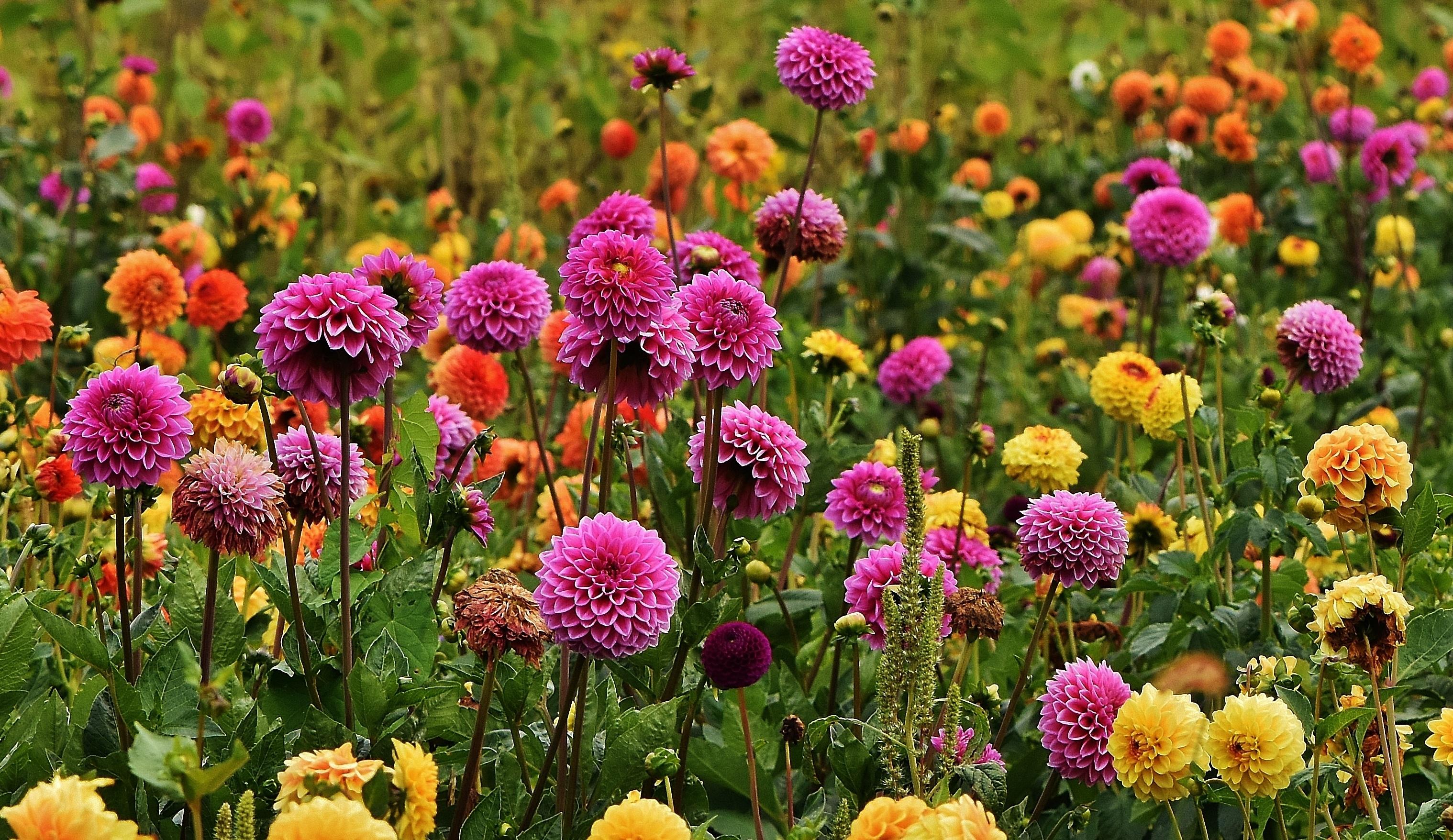 Images Gratuites : fleur, Prairie, prairie, pétale, Floraison, l ...