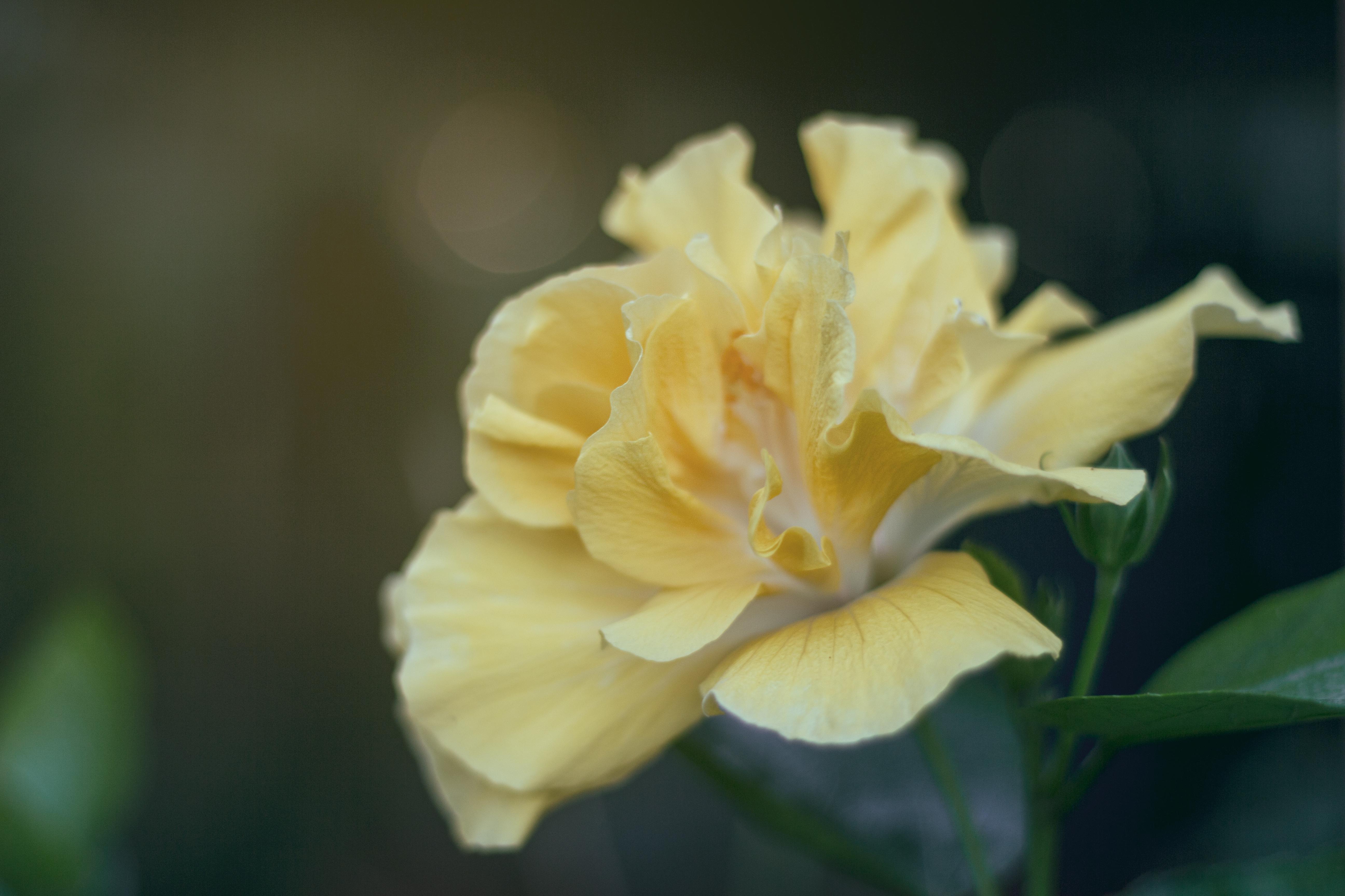 Gambar Mekar Menanam Daun Bunga Berkembang Botani Kuning