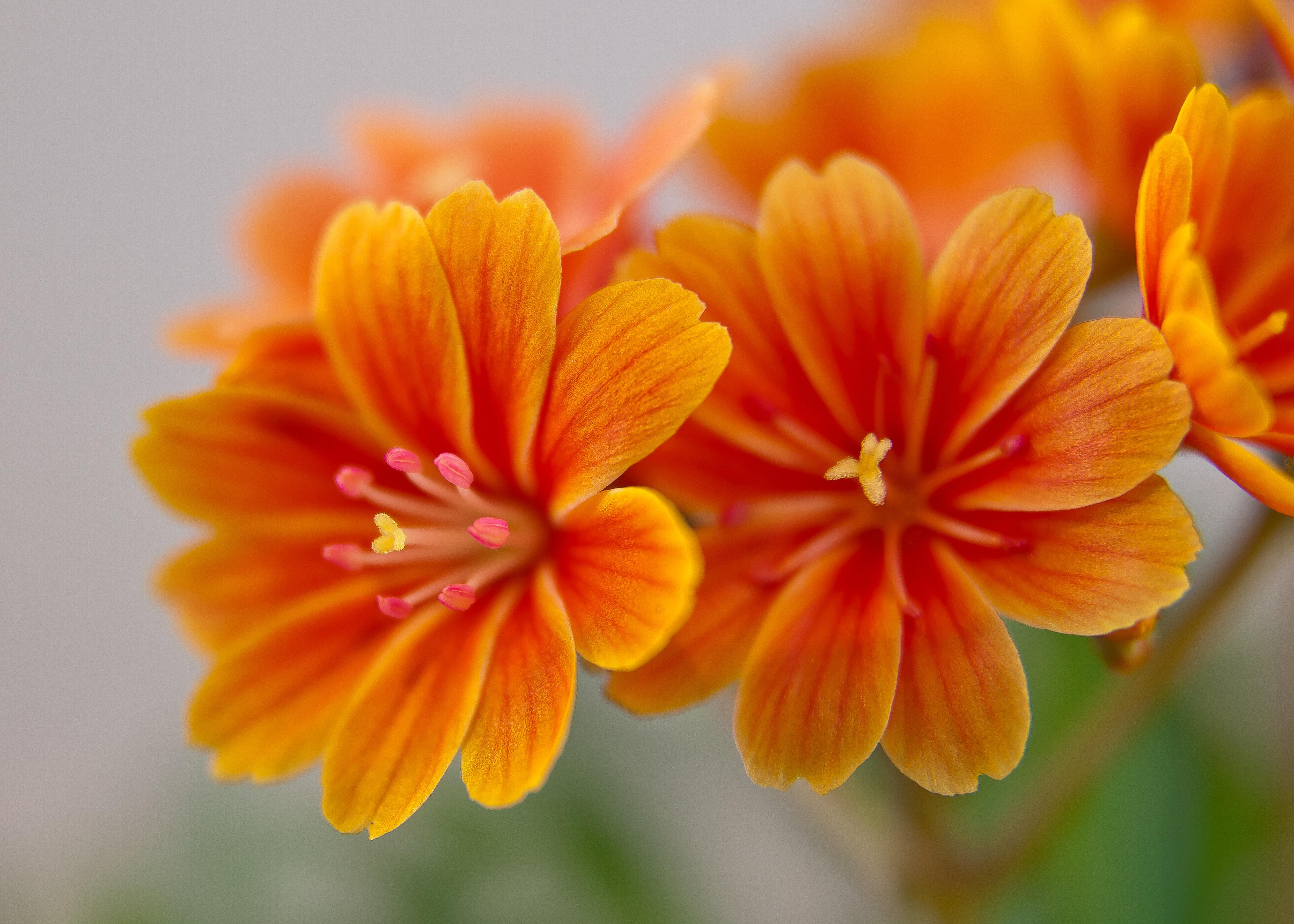 Free Images Blossom Flower Petal Bloom Spring Botany Flora