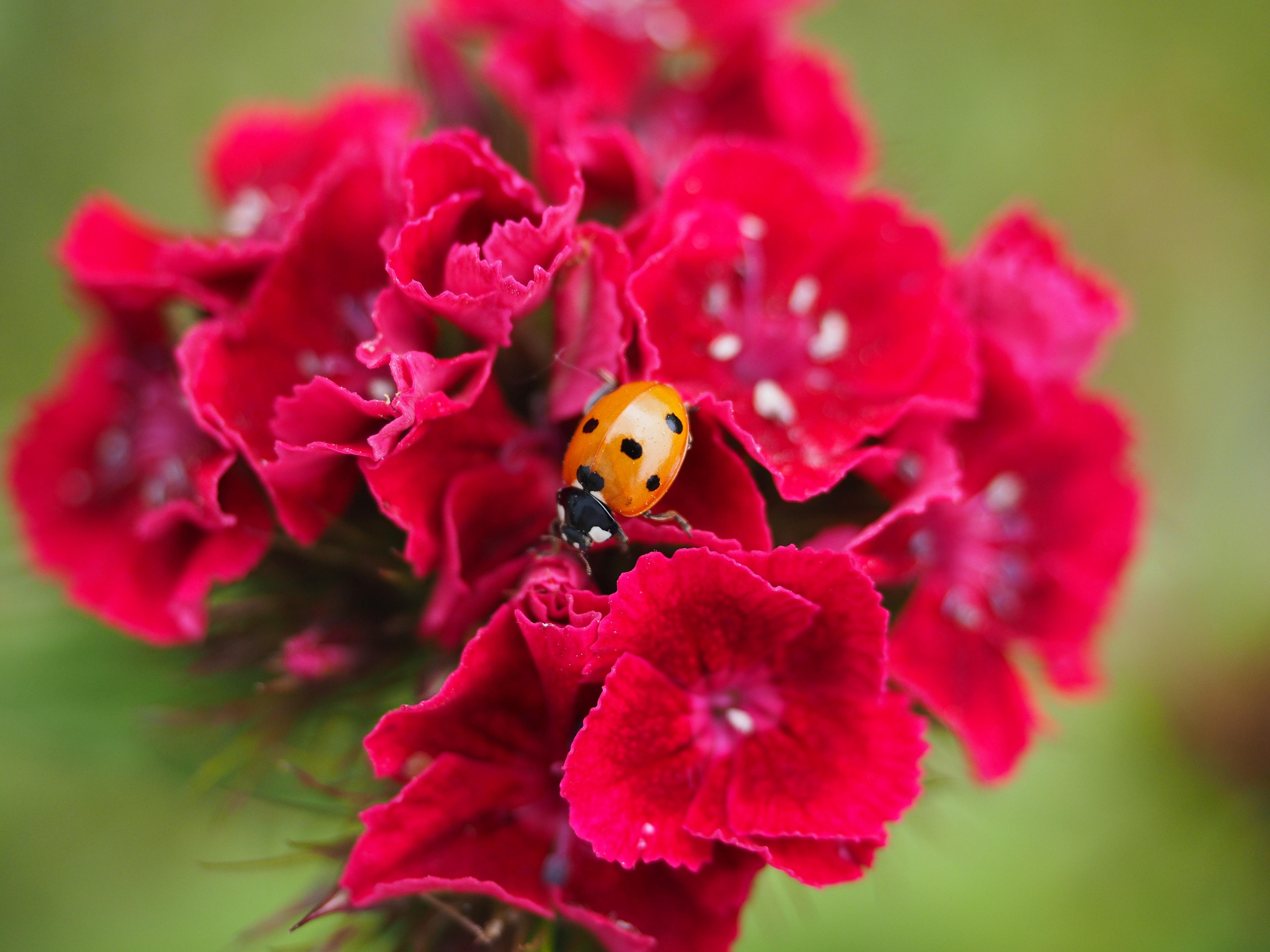 images gratuites : fleur, la photographie, pétale, floraison