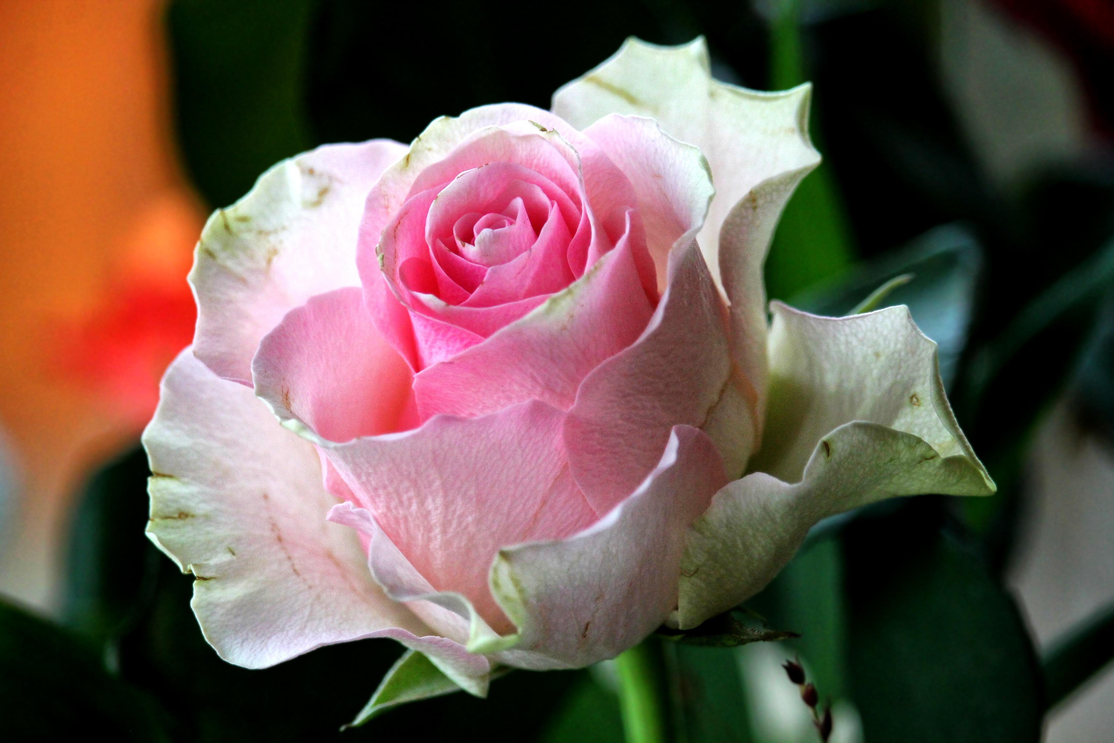 Цветы крупным планом фотографии