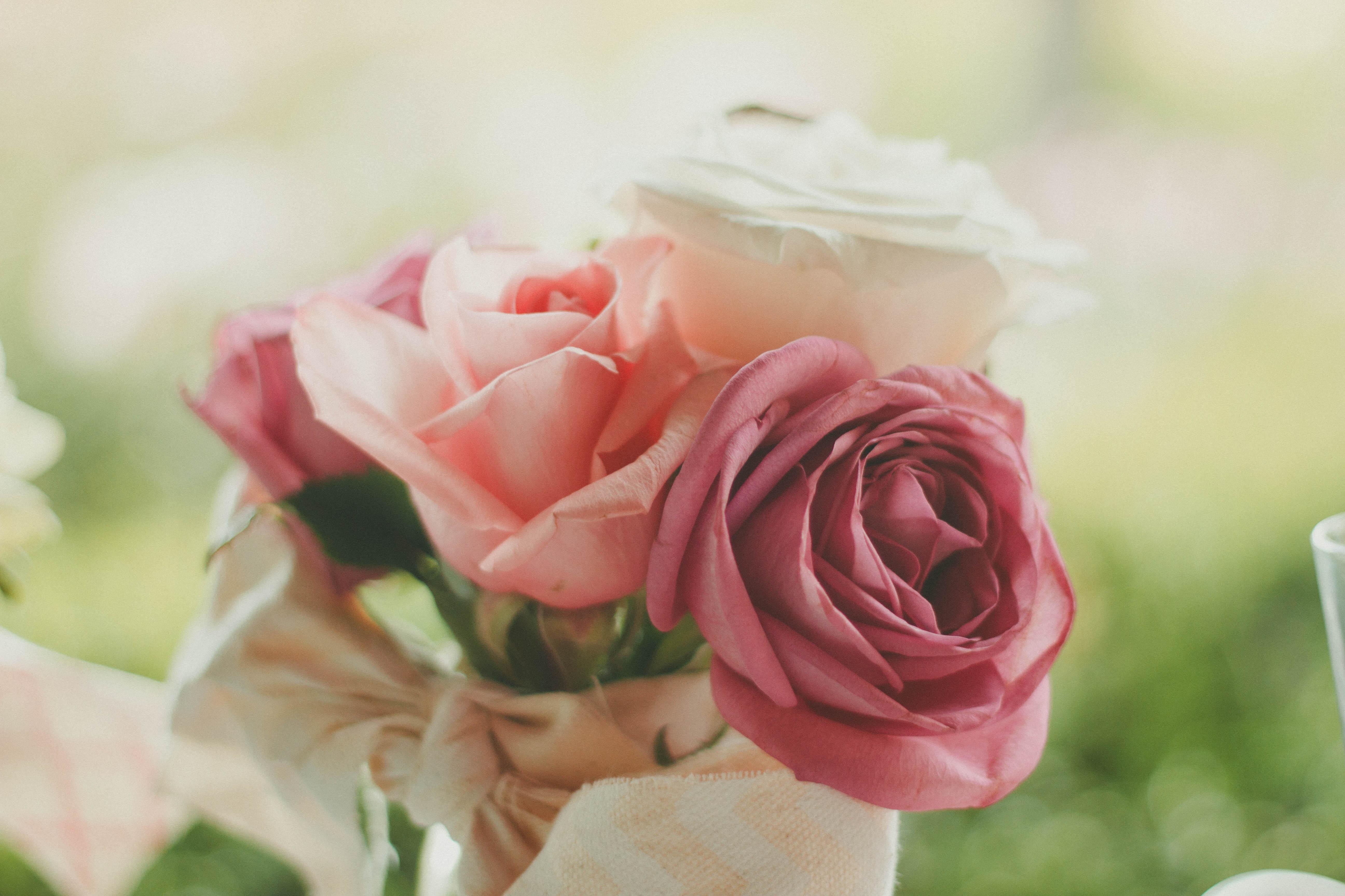 Free Images Blossom Petal Closeup Pink Close Up Floristry