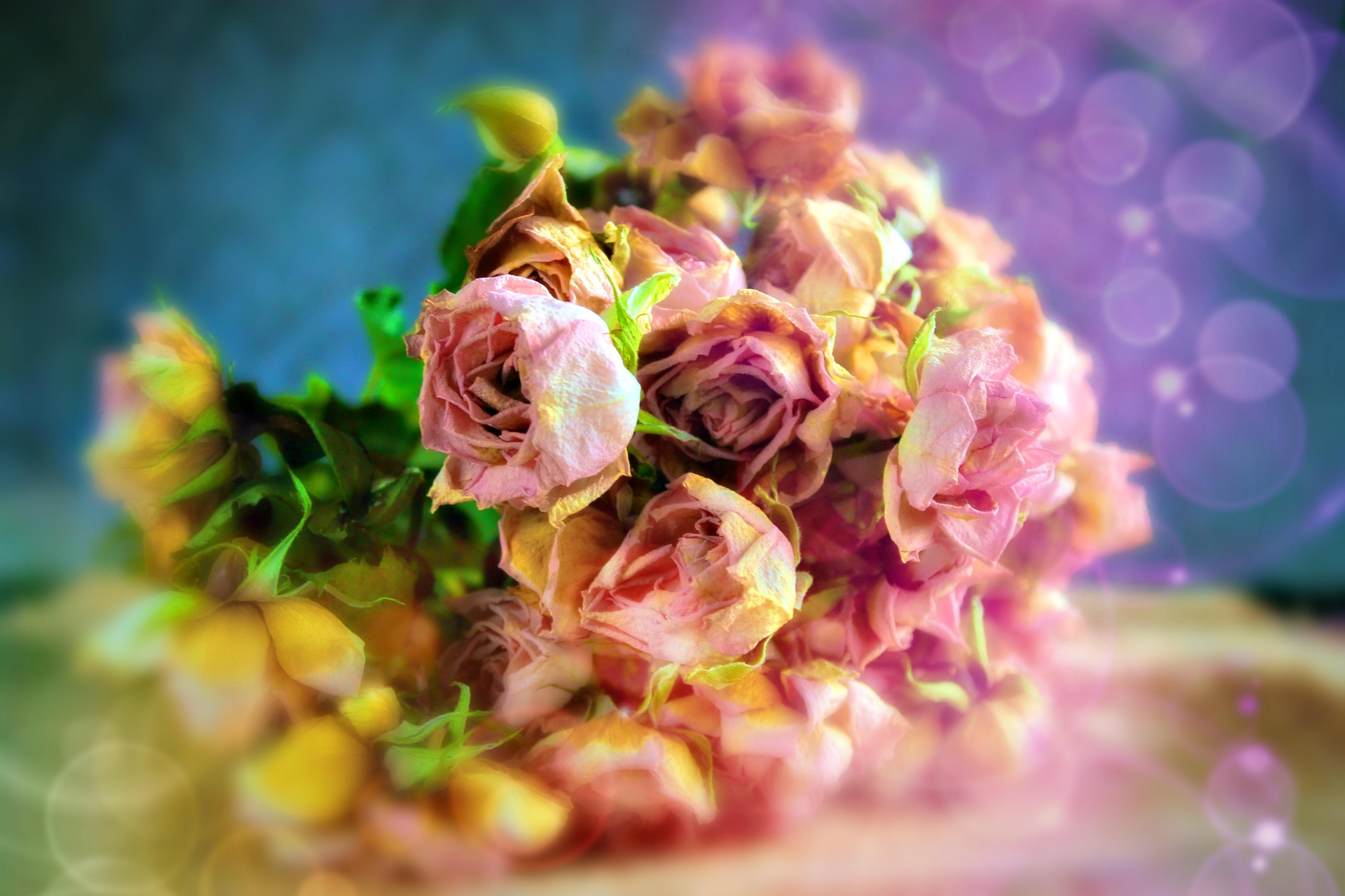 клиент тинькофф большие фотографии профессионалов цветов пойдёт