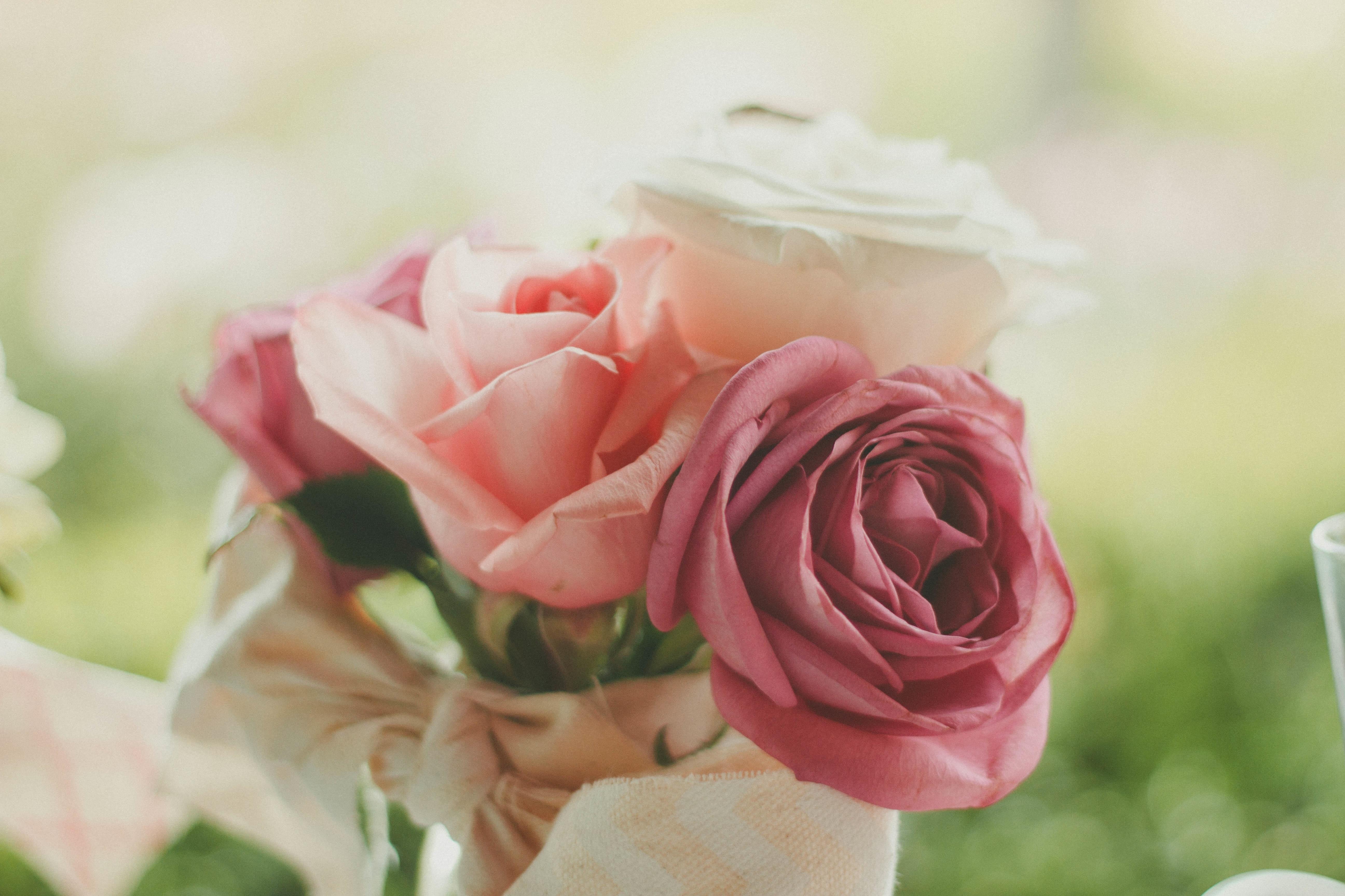 Free Images Blossom Petal Love Romance Romantic Pink Wedding