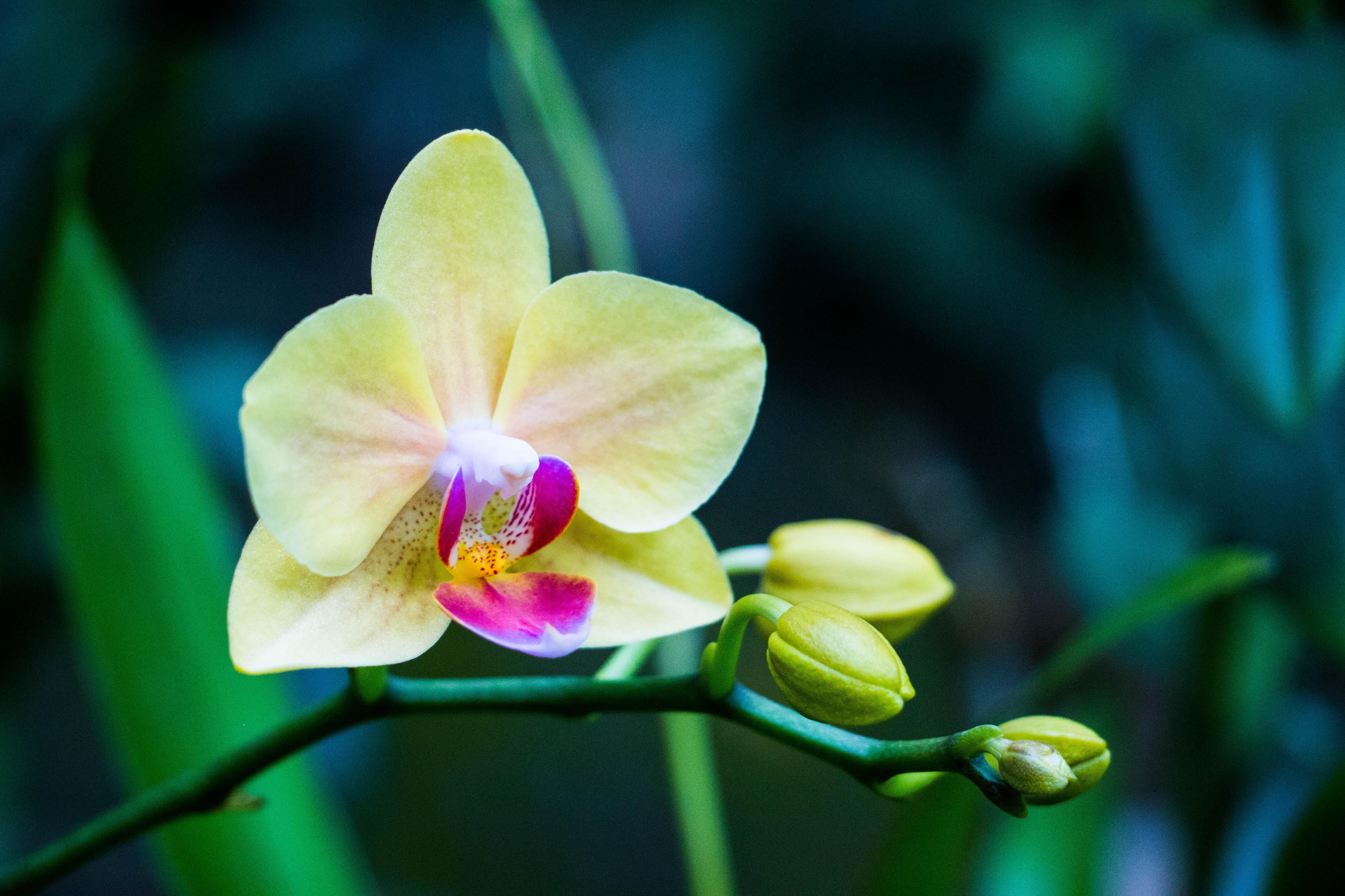 орхидея зелено желтая фото что все