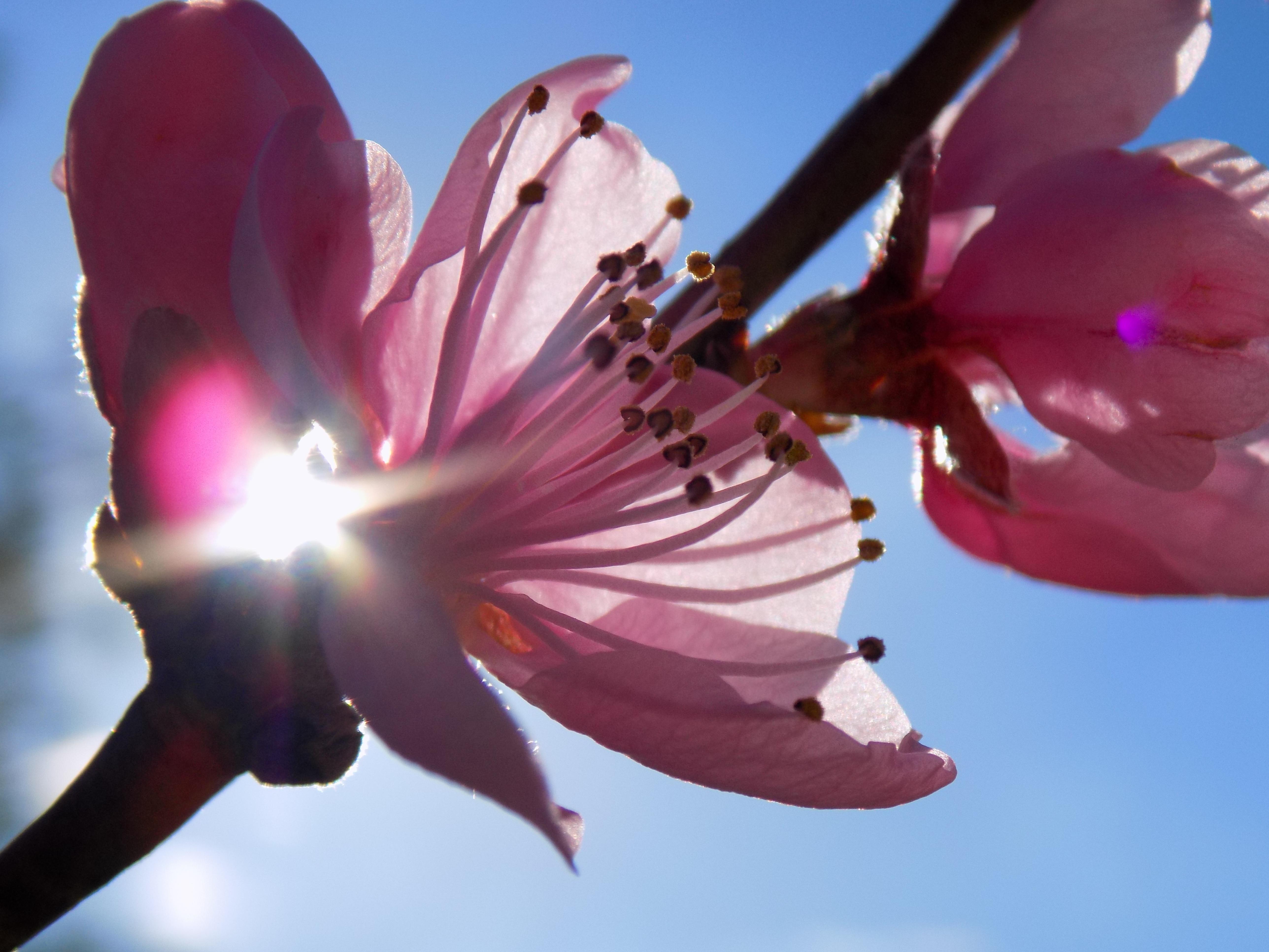 что картинки как расцветают цветы инстаграм певец выкладывает