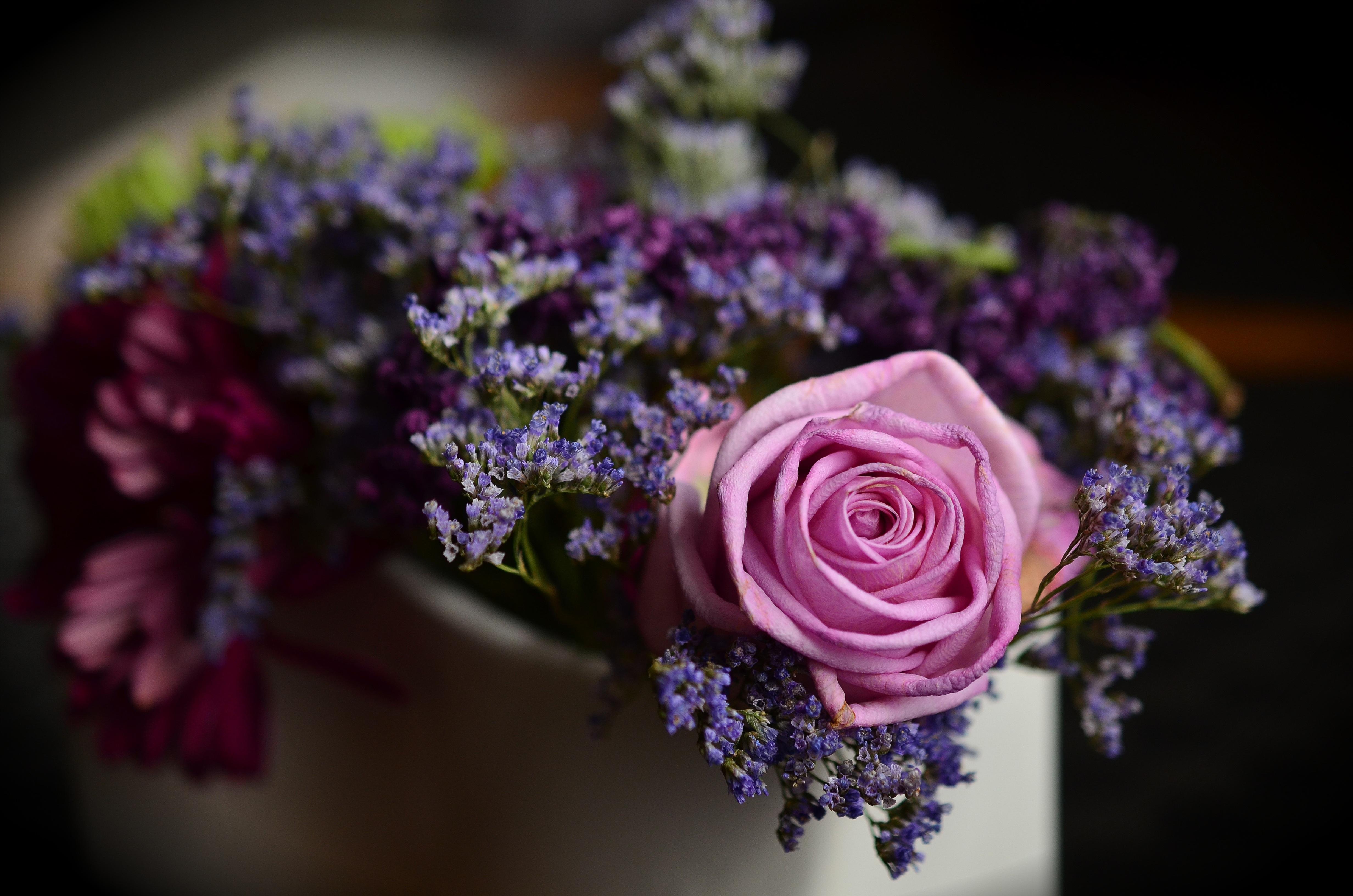 Free Images : blossom, purple, petal, rose, pink, flora ...