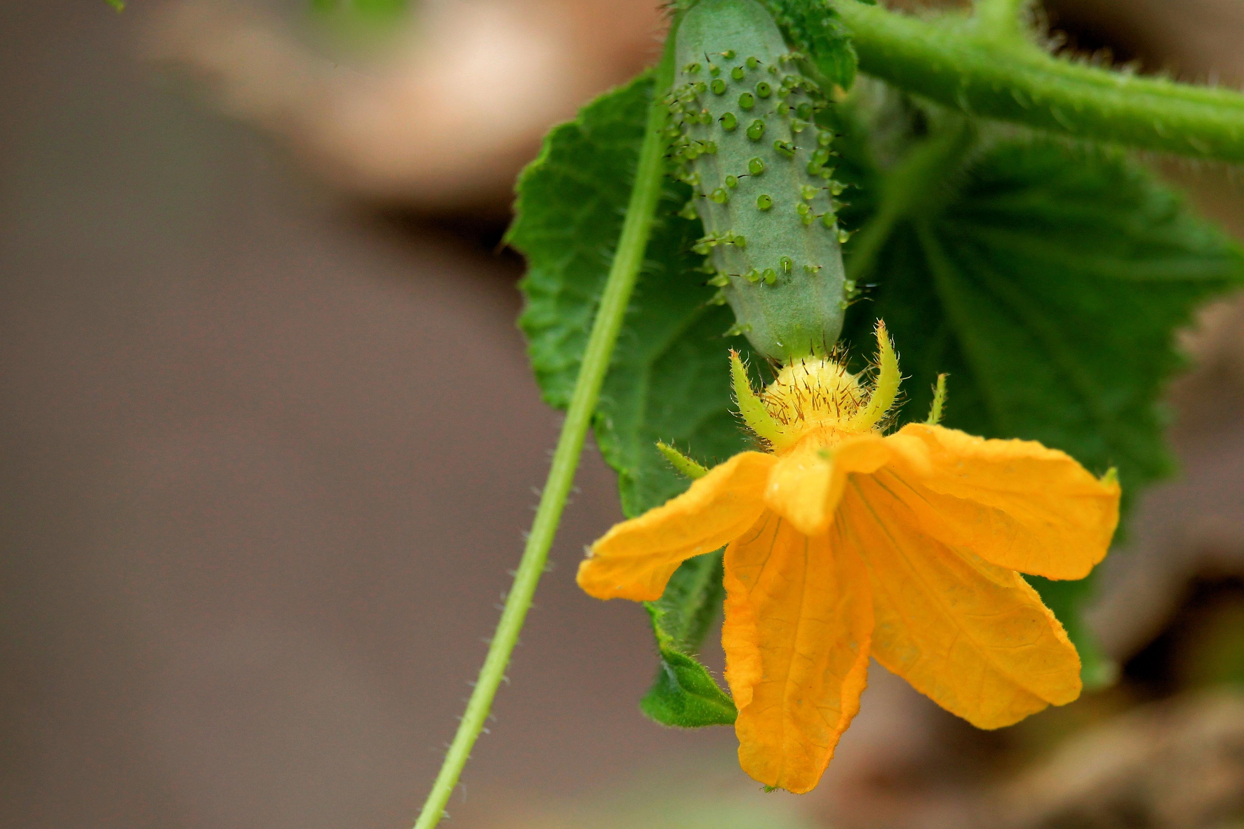 Free Images Leaf Flower Bloom Food Green Produce Botany