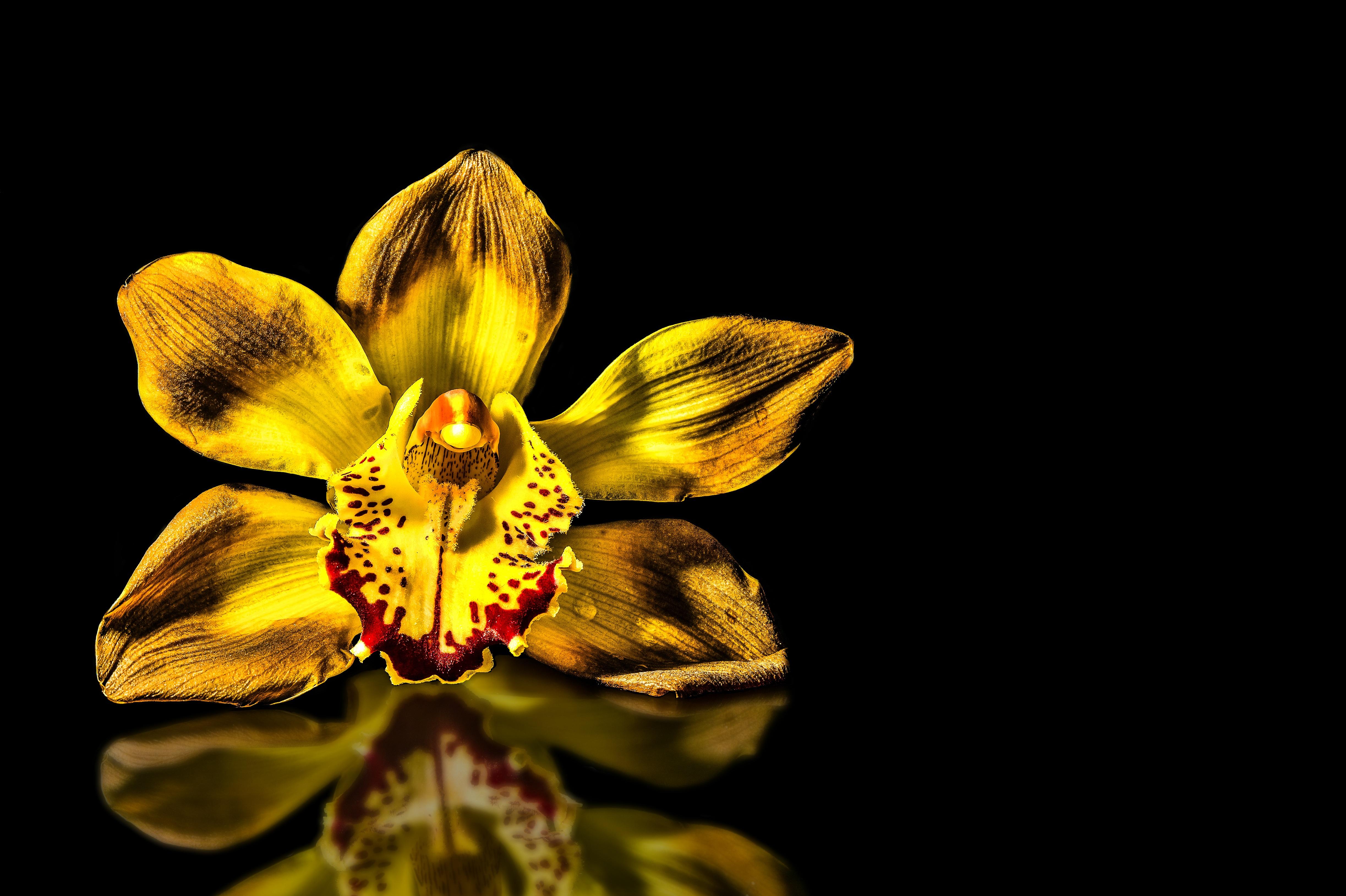 это актуально золотая орхидея цветок фото этом случае