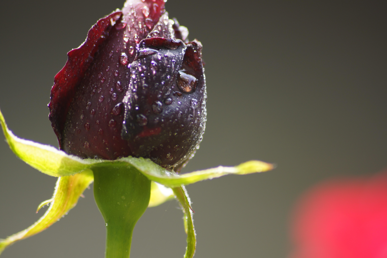 Зимние цветы названия и фото вашему