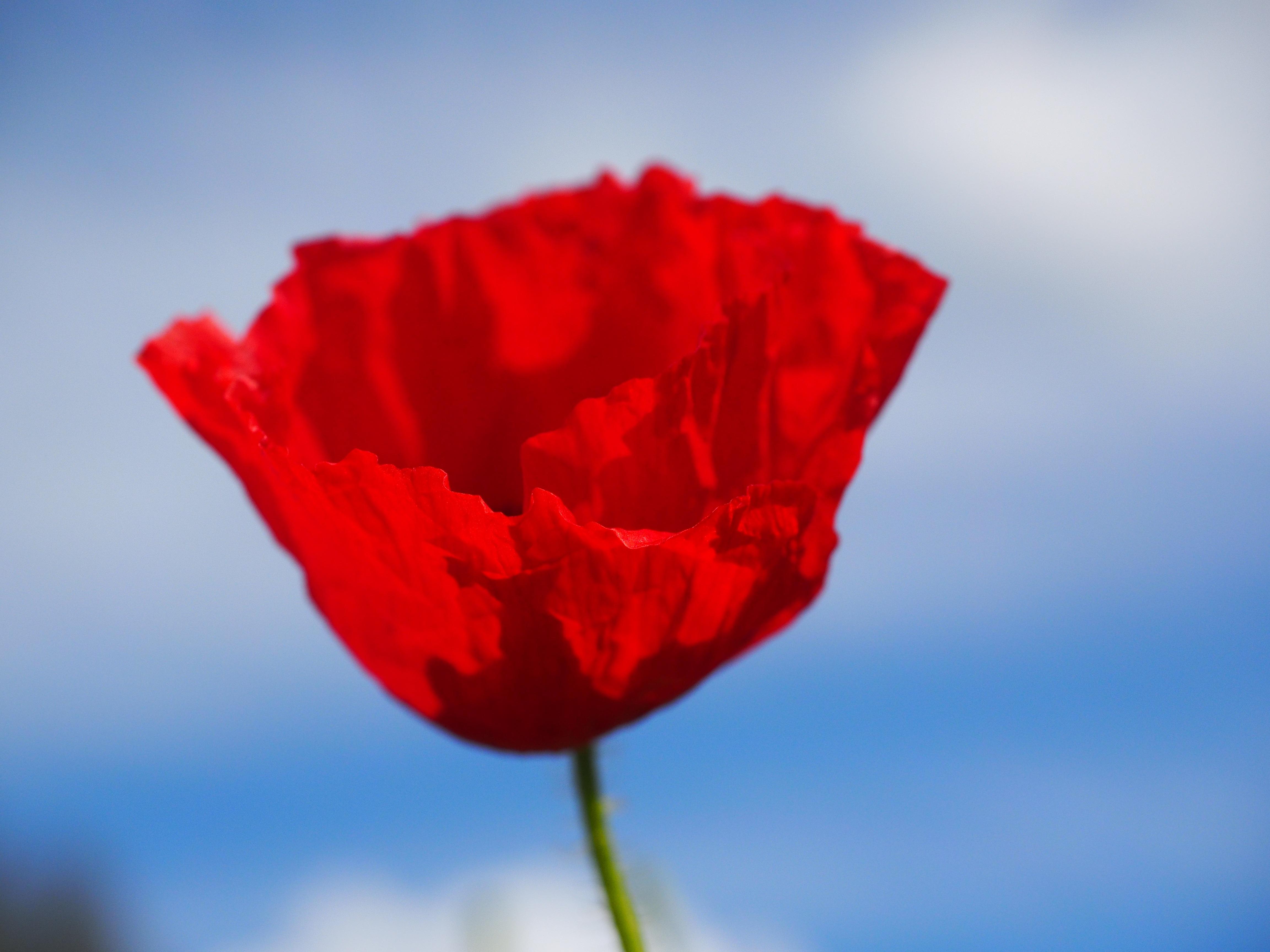 Free Images : blossom, sky, petal, bloom, color, colorful, close ...