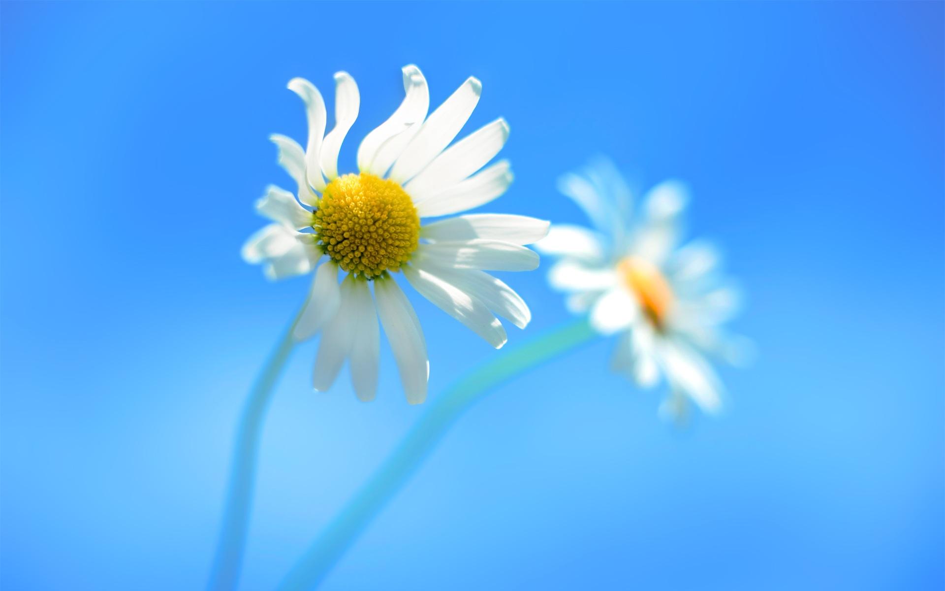 Gambar Mekar Menanam Padang Rumput Sinar Matahari Daun Bunga