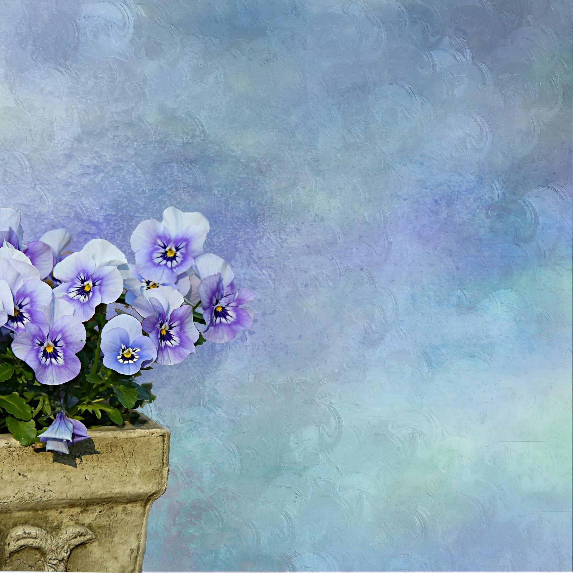 2dc0044ab616 Free Images   blossom