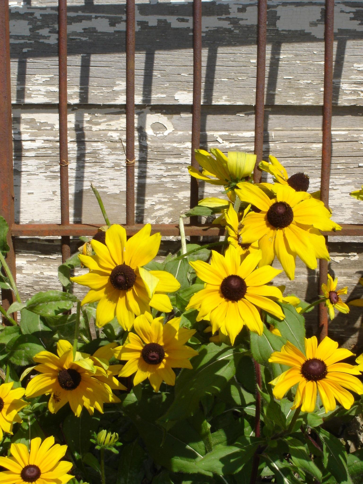 Images Gratuites : tige, feuille, Floraison, floral, environnement ...