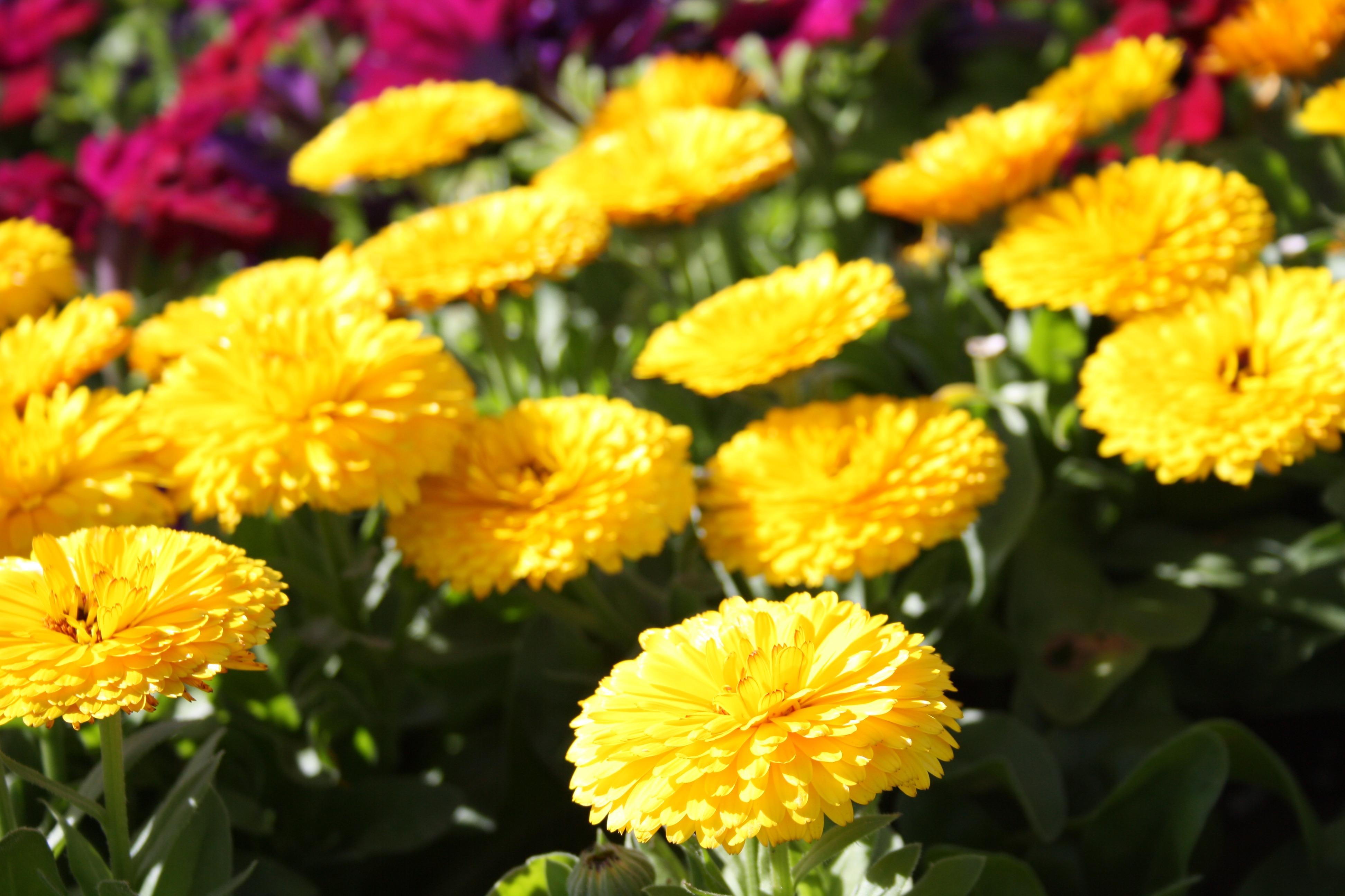 Free Images Blossom Stem Leaf Petal Bloom Floral Environment