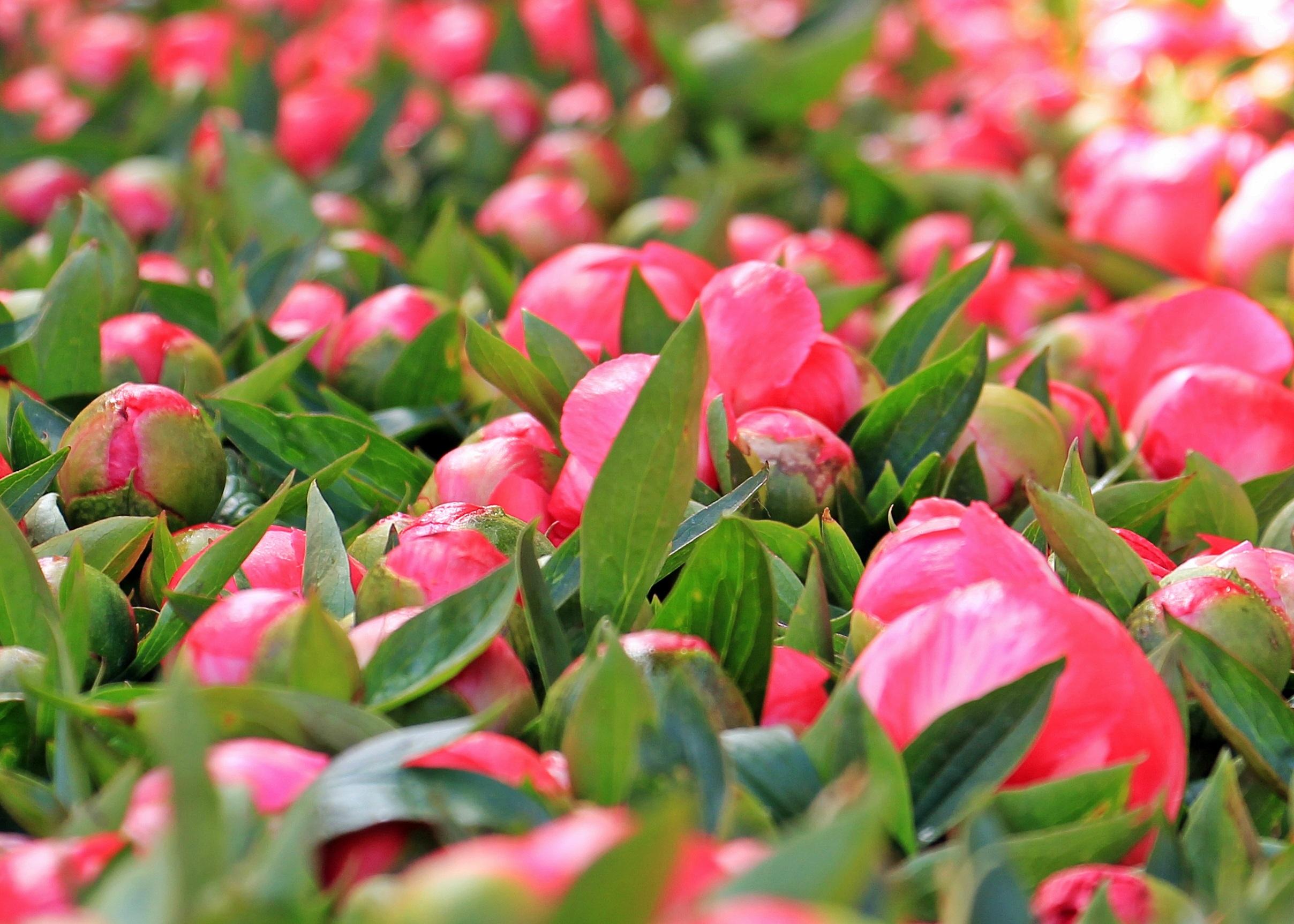 Fotoğraf çiçek Güneş ışığı Yaprak Taçyaprağı çiçek Açmak Yaz