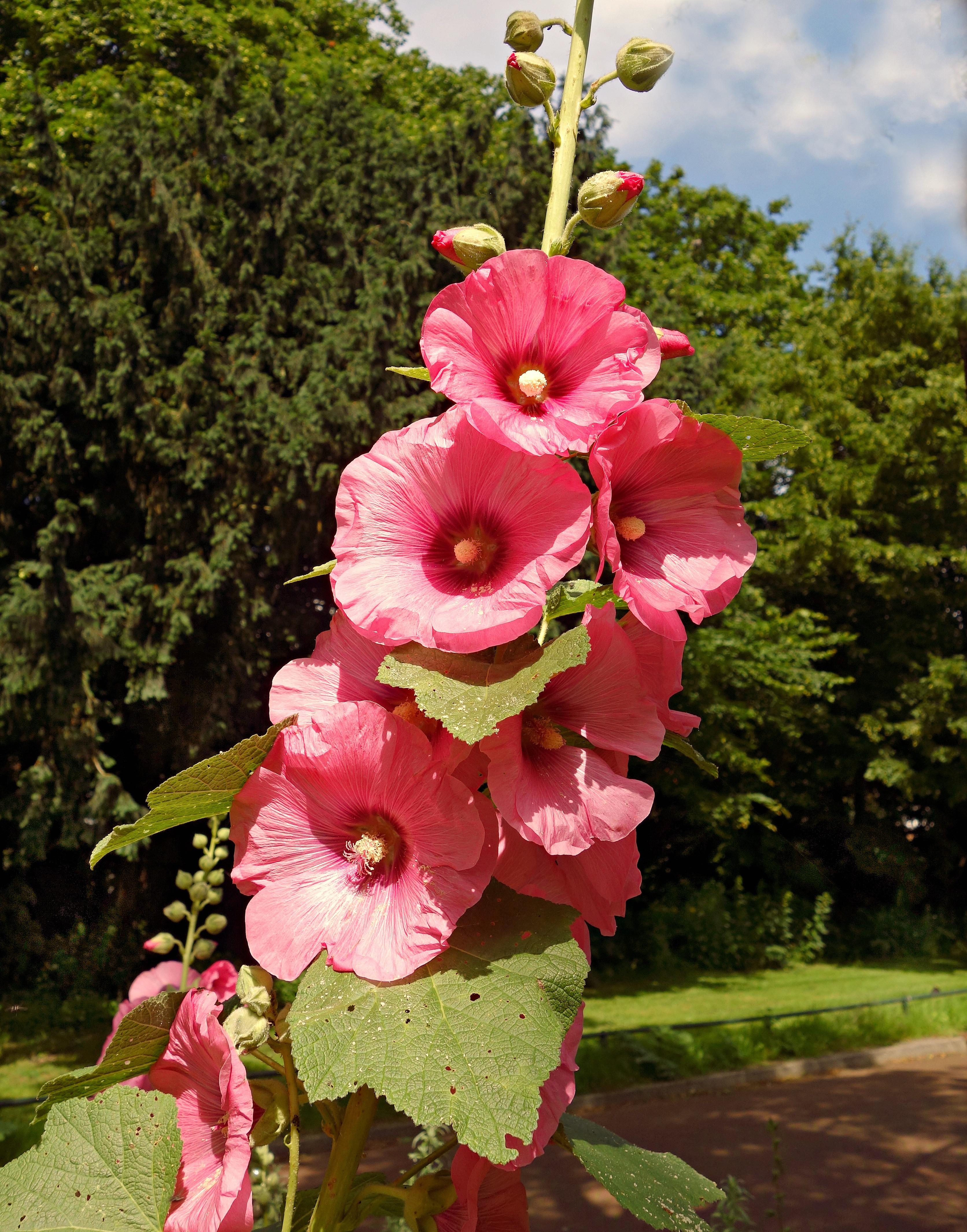 images gratuites : fleur, ensoleillement, tige, pétale, été
