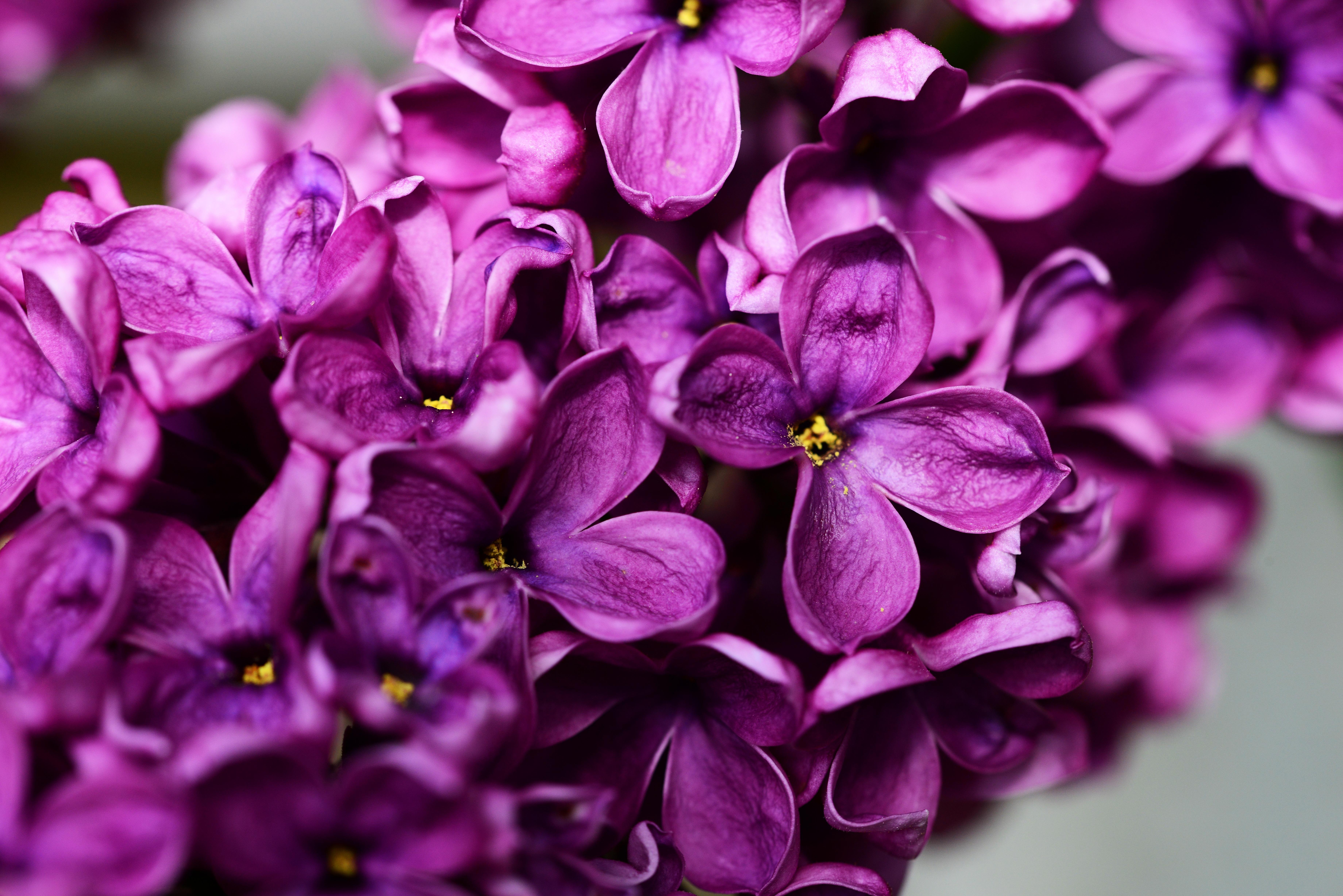Картинки в фиолетовом цвете фото