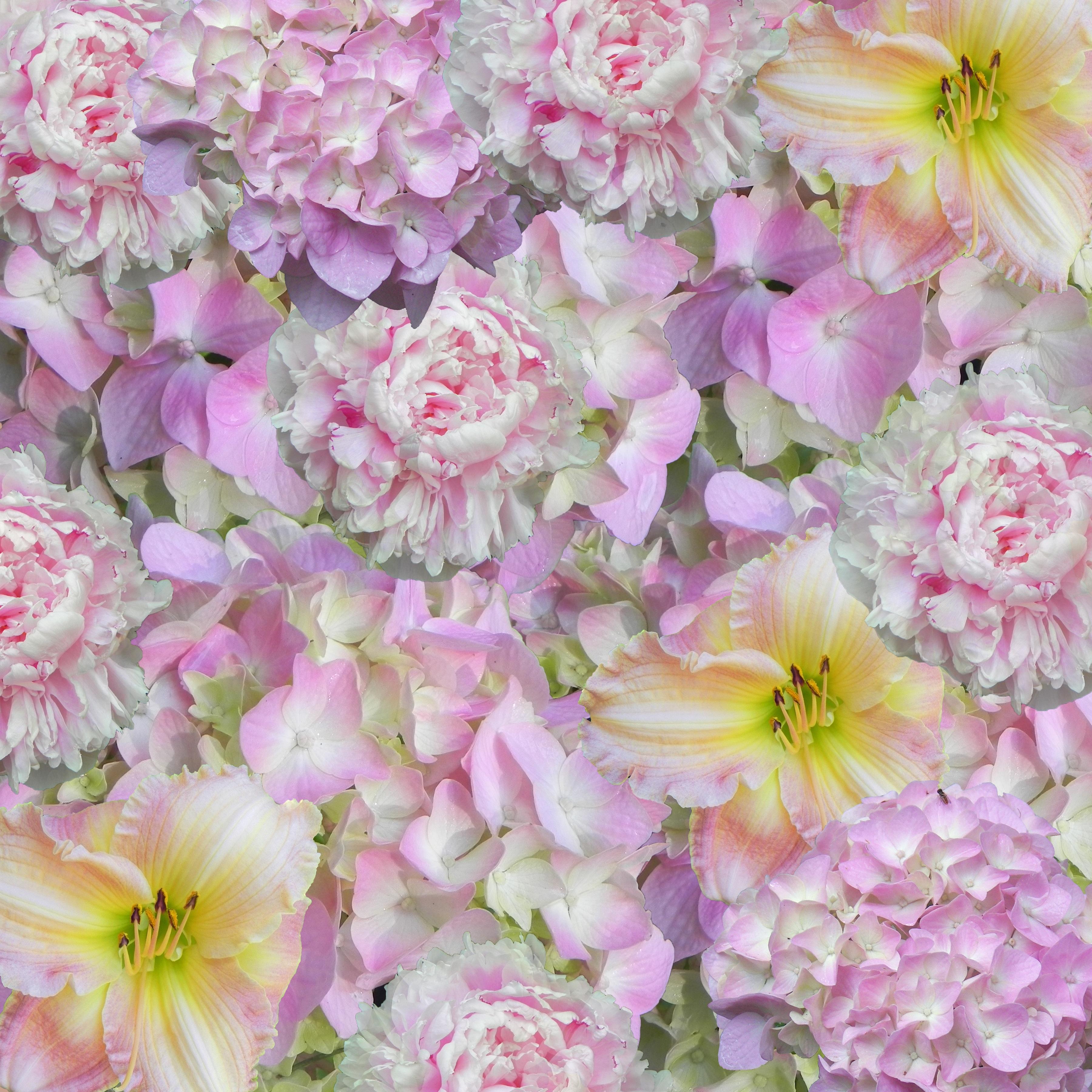 Free Images Blossom Texture Petal Floral Pink Flora Design