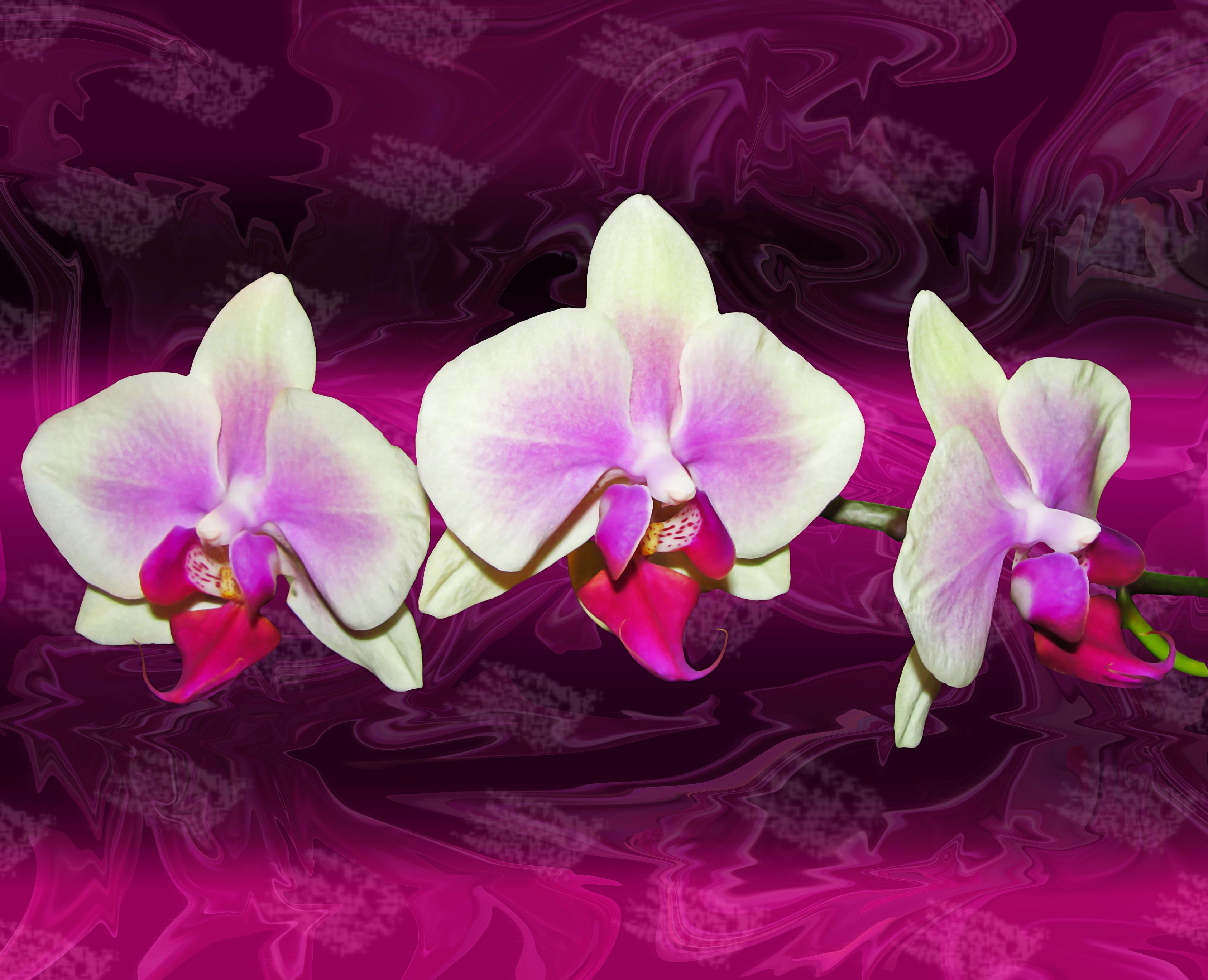 наверняка орхидея номер фотобанках жилье помощью агентства