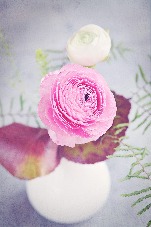 Free Images : blossom, white, petal, bloom, rose, macro, pink, close ...