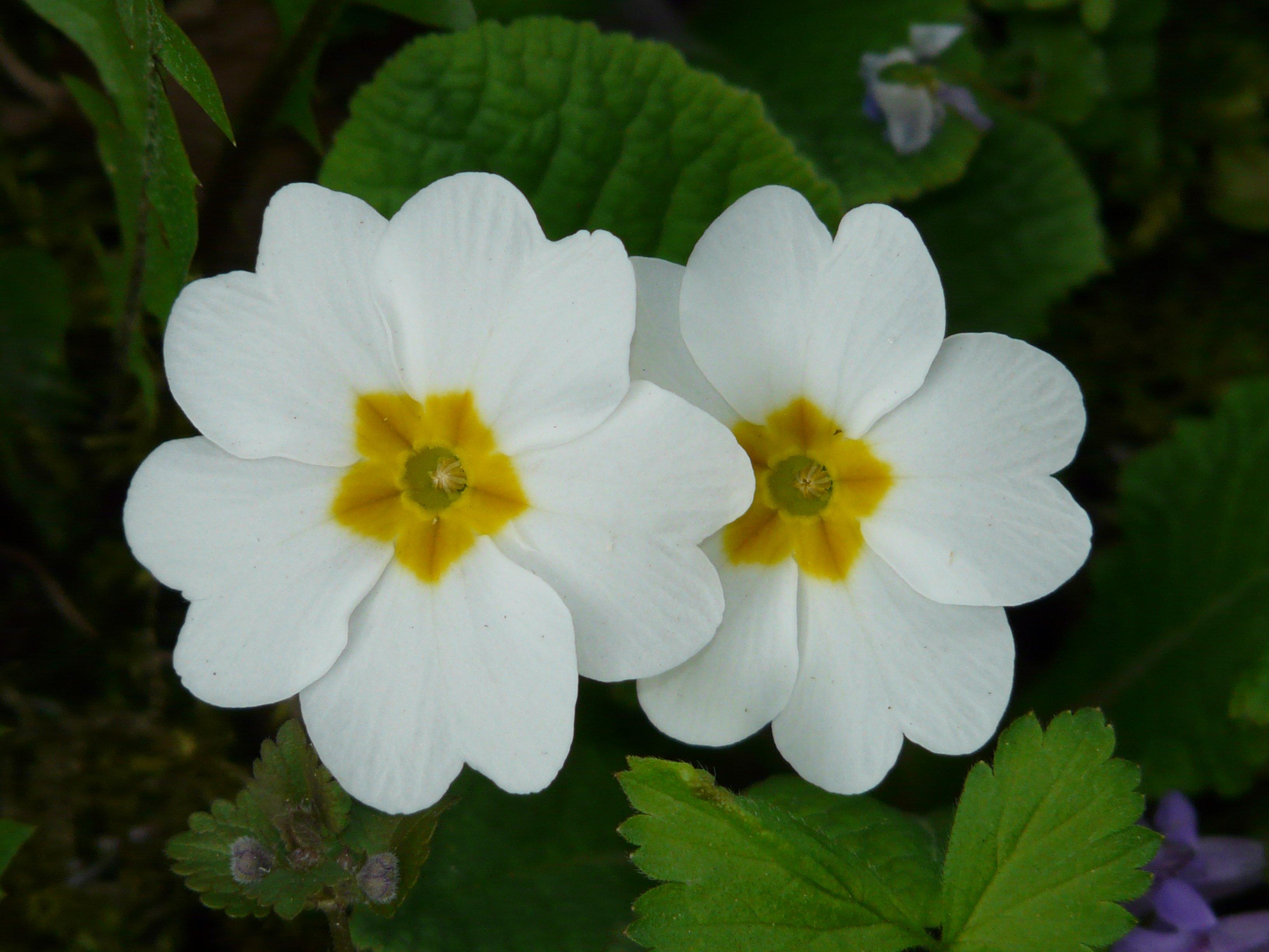 Free Images Blossom White Flower Petal Bloom Color Botany