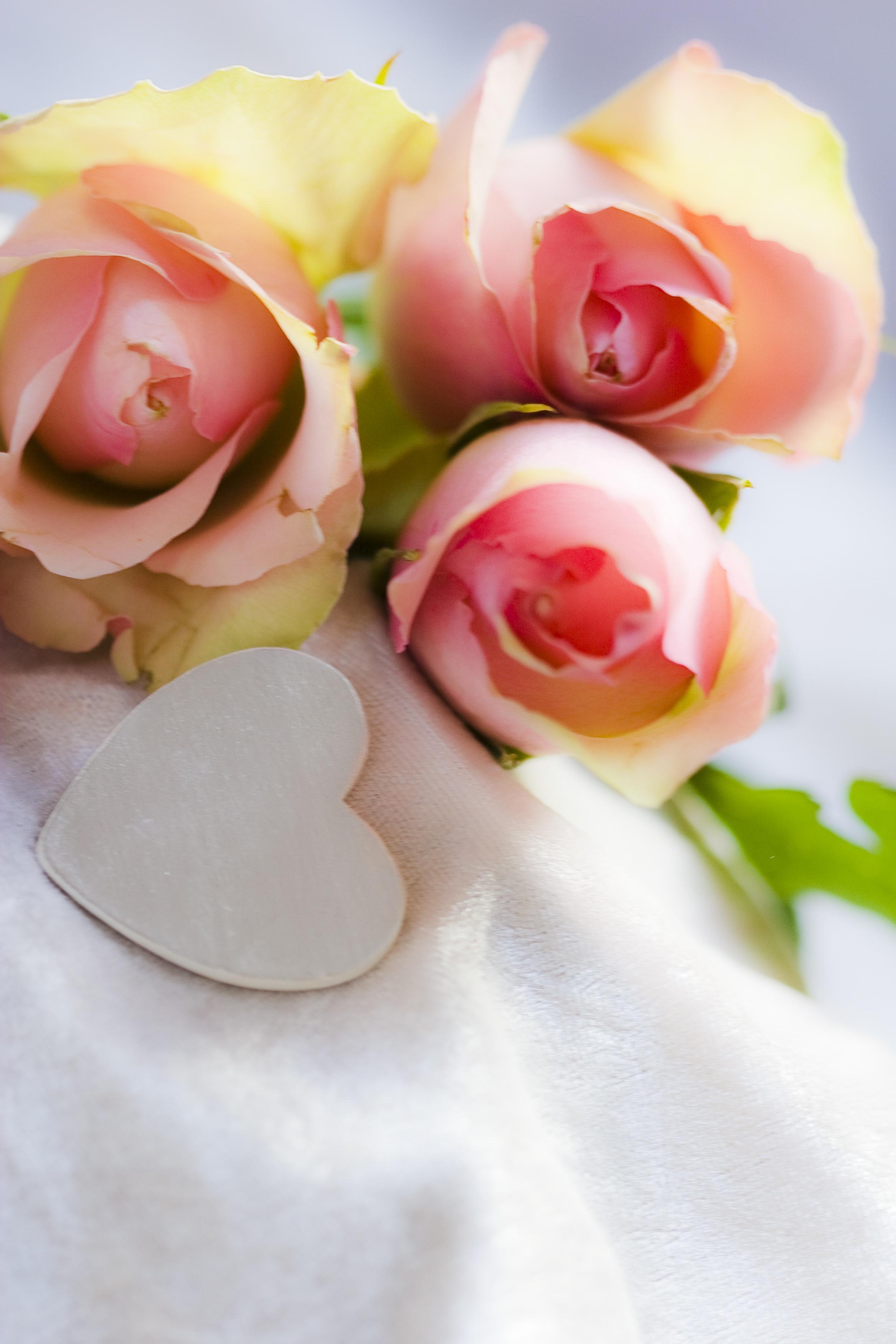 Free Images Blossom White Petal Bloom Heart Rose Food