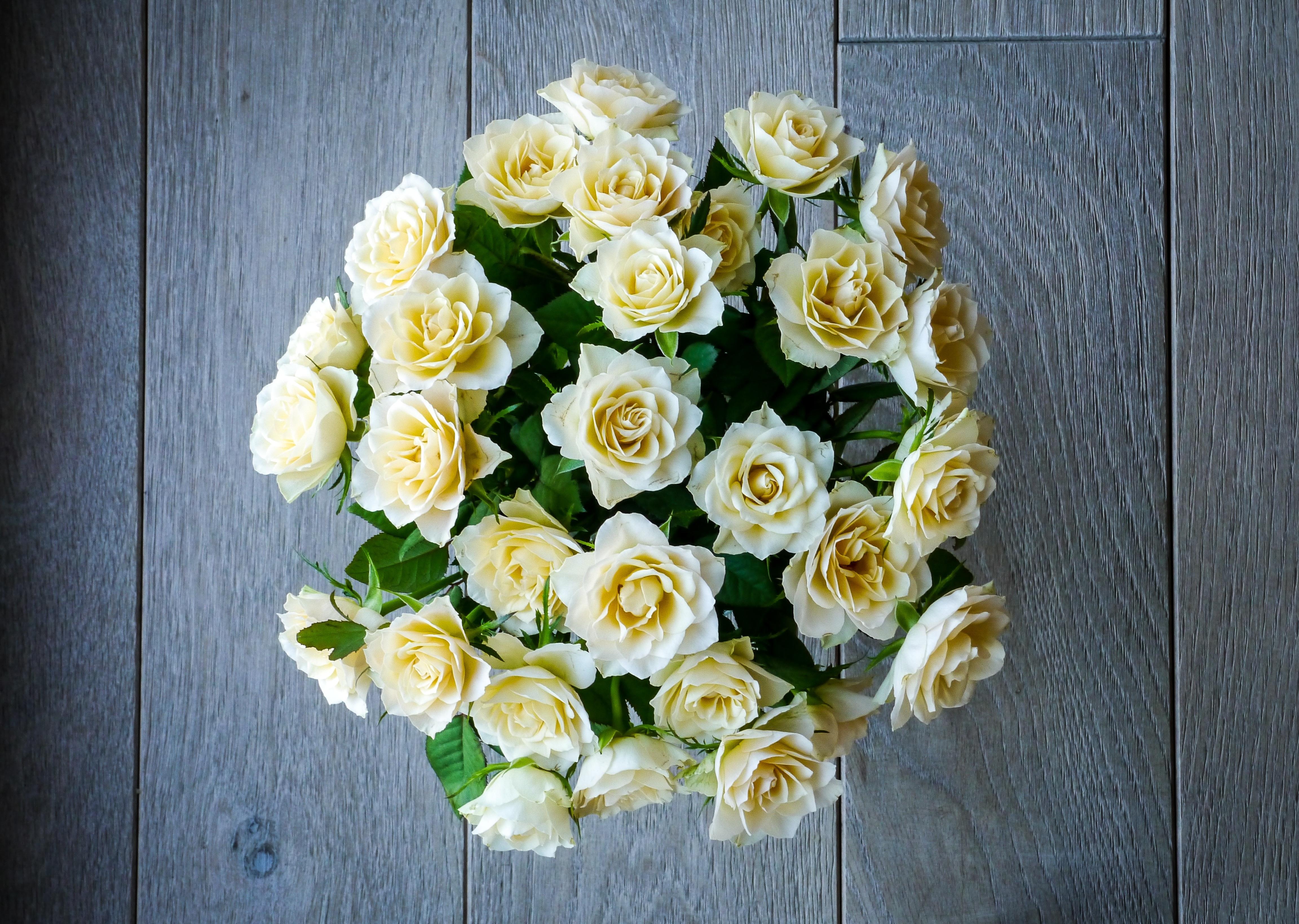 Free Images Blossom White Petal Bloom Love Romance Romantic