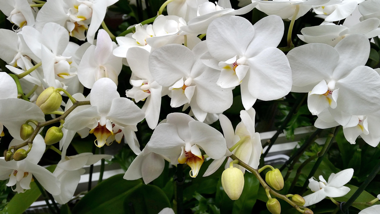 Free Images Blossom White Flower Petal Bloom Spring Flora