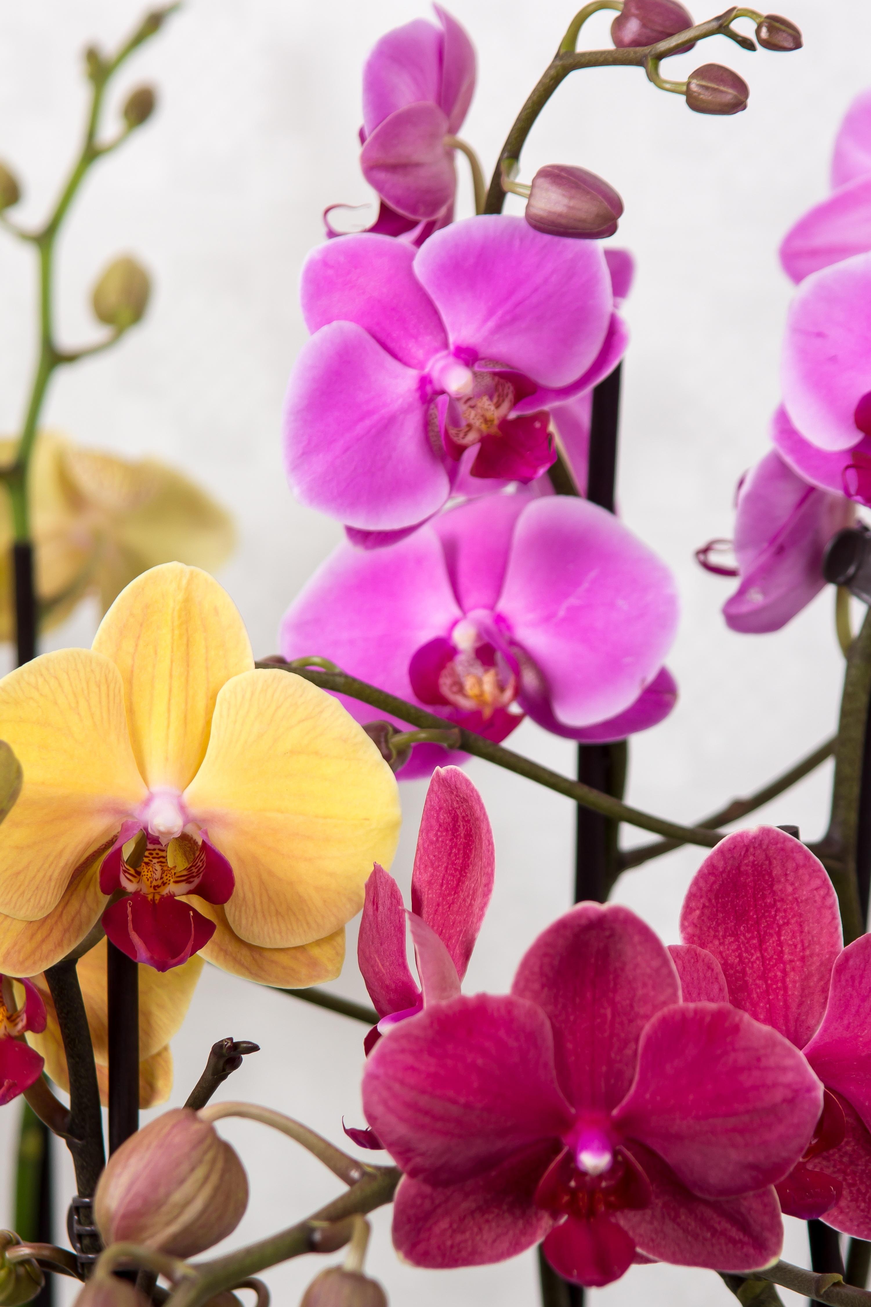 свой долгожданный фото всех цветов орхидеи каким-то причинам