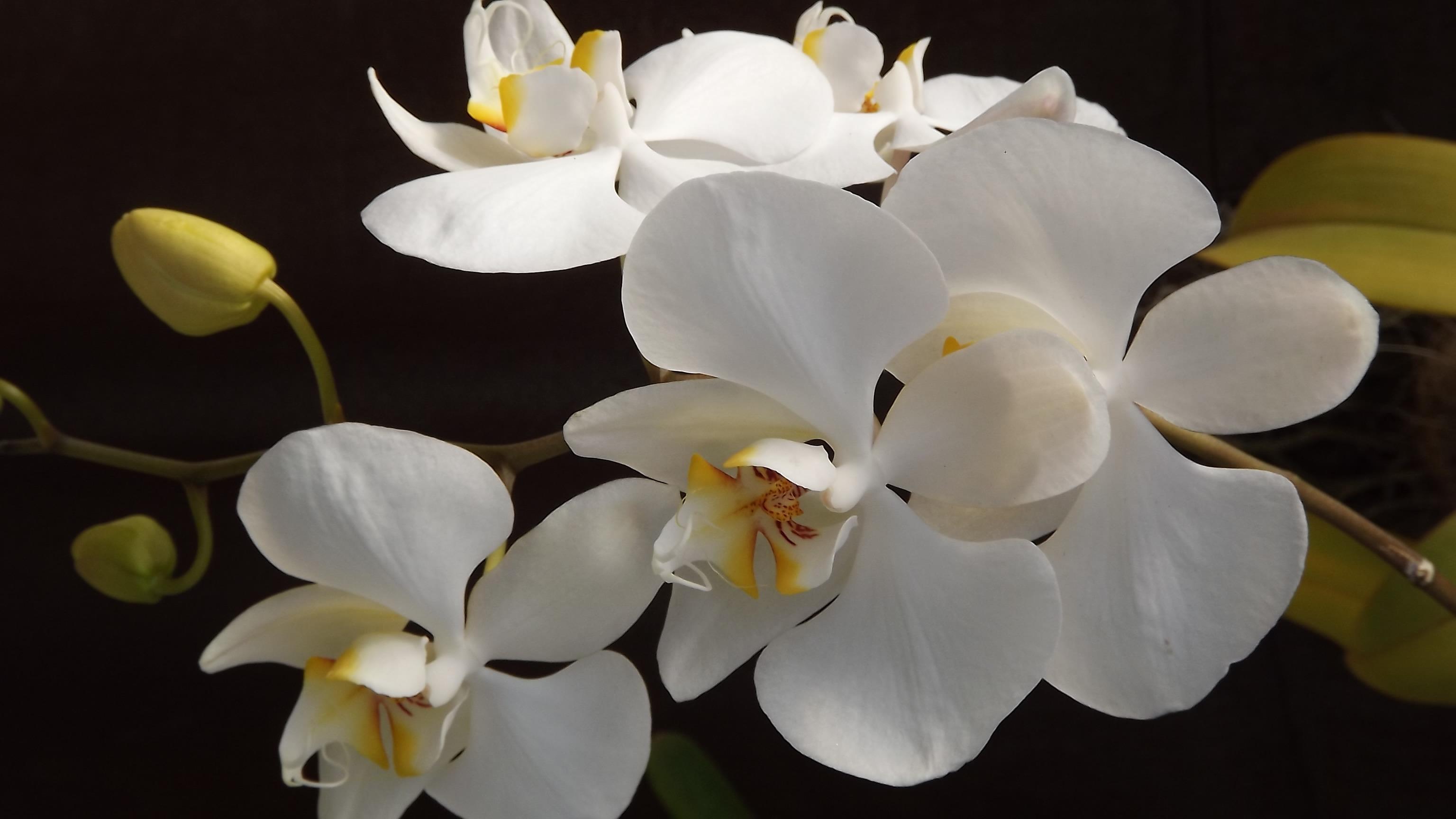 Kostenlose Foto Blühen Weiß Blume Blütenblatt Liebe