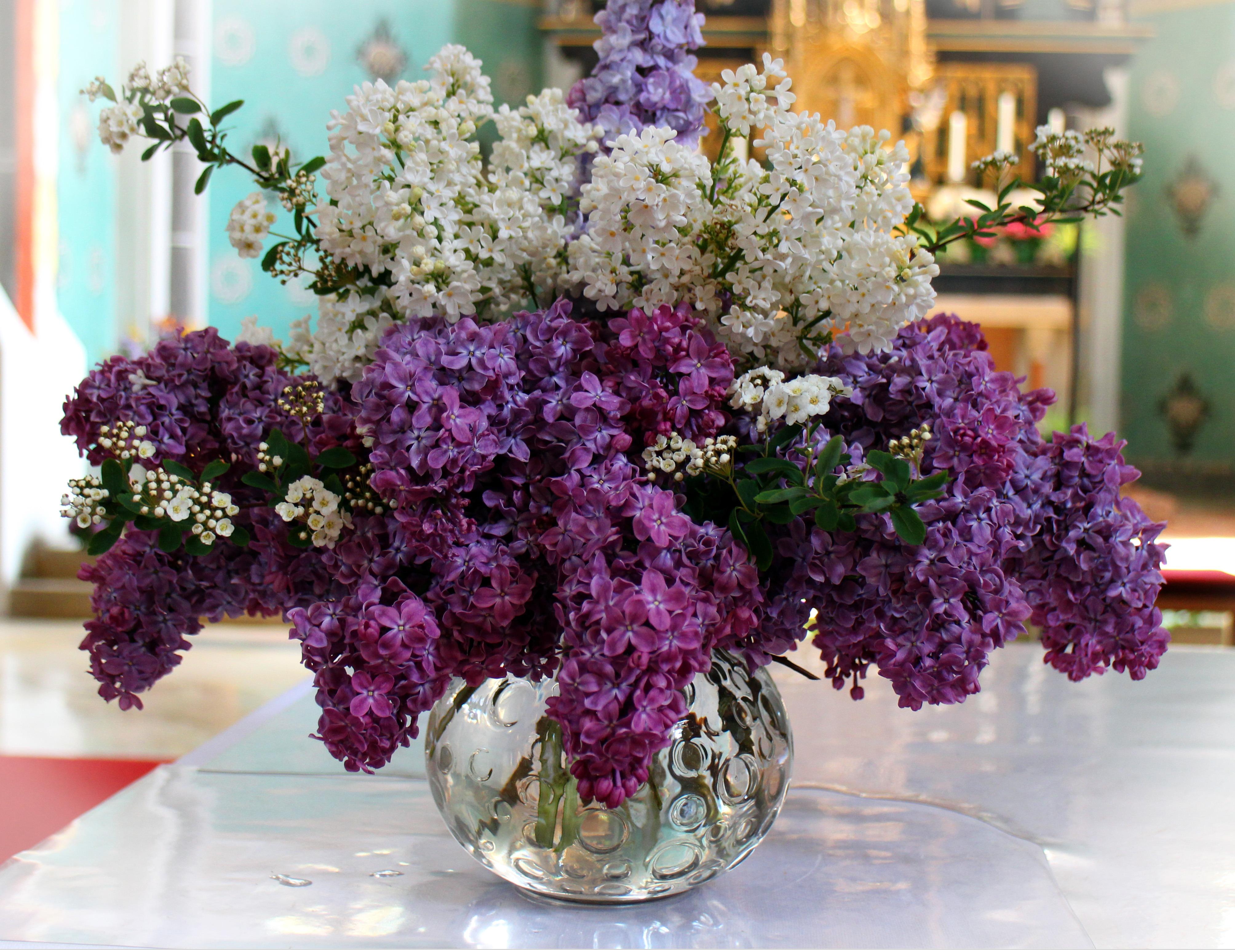 Free Images : blossom, white, purple, bloom, floristry, ornamental ...