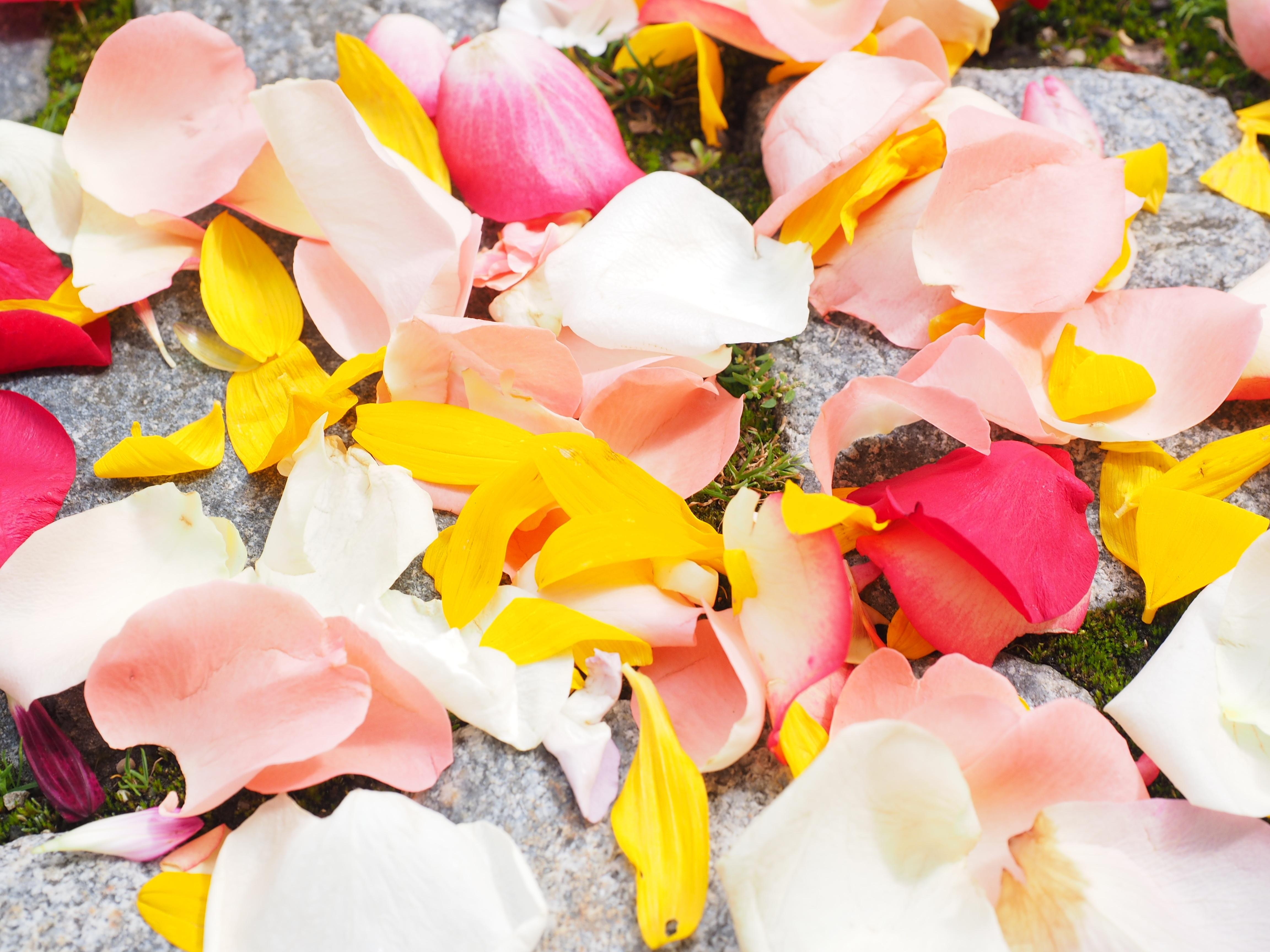 Free Images Blossom White Leaf Petal Love Spring Red Color