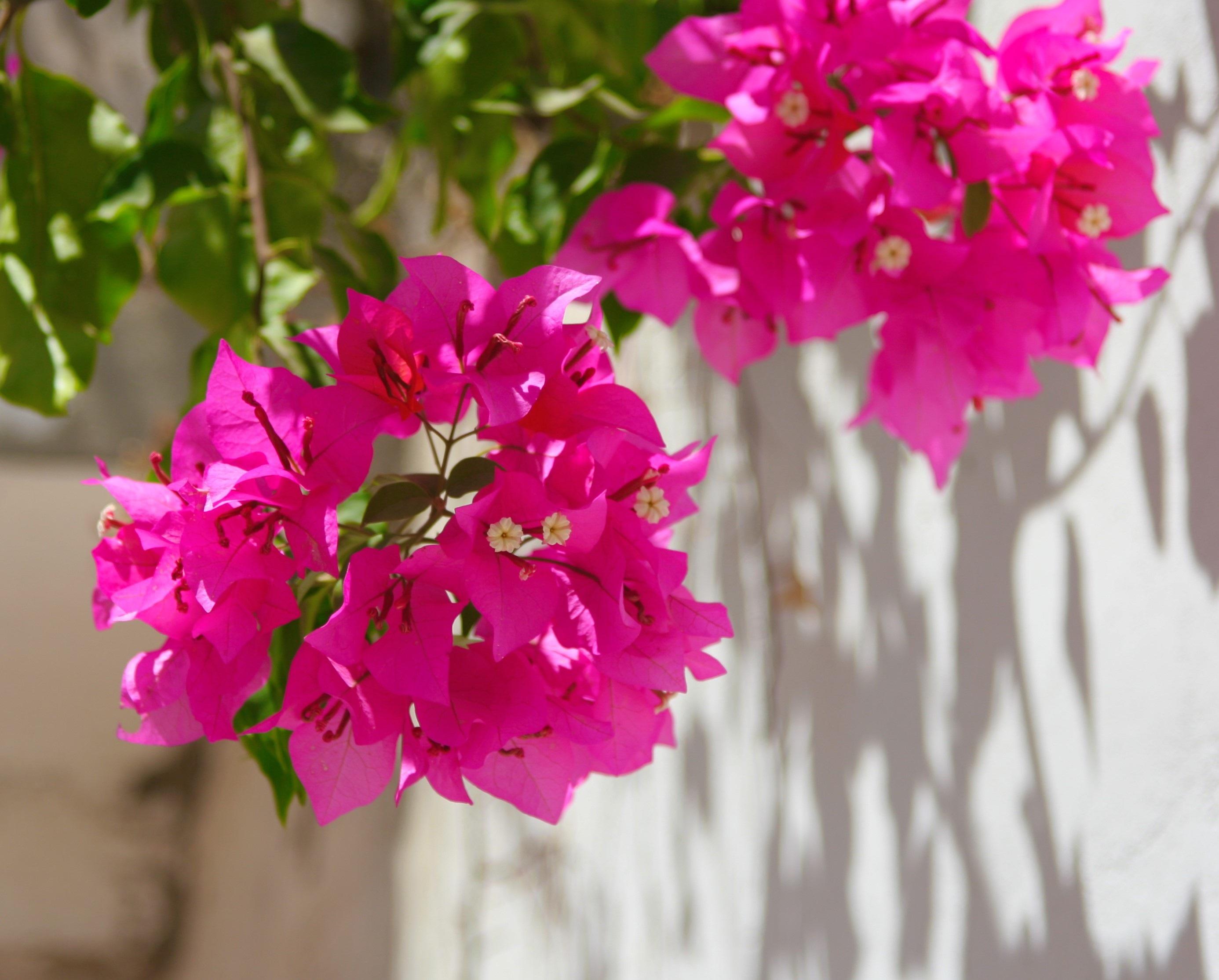 free images blossom leaf flower petal green botany pink